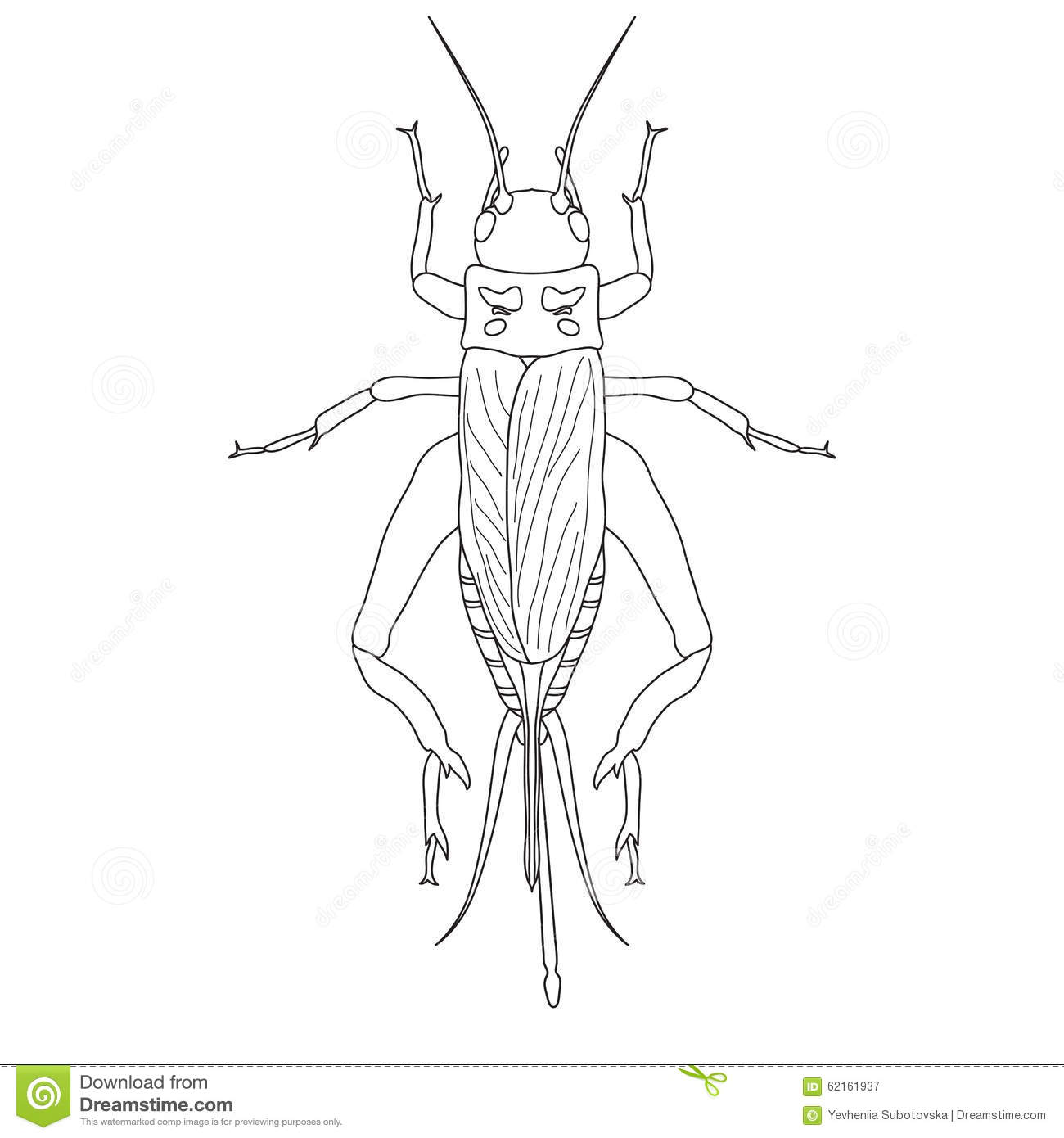 Cricket Grig Gryllus Campestris Stock Vector Image