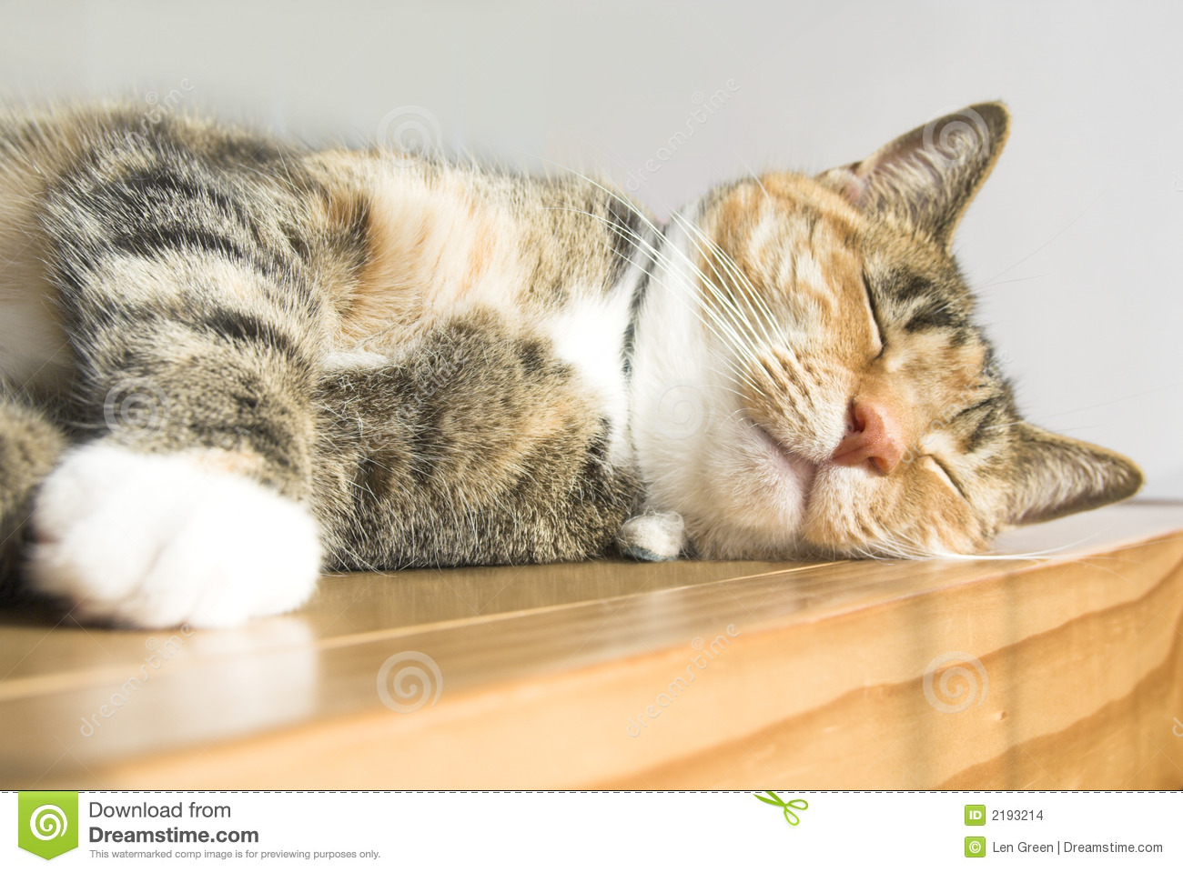 cute cat stock photo. image of feline, doze, dozing, dreams - 2193214