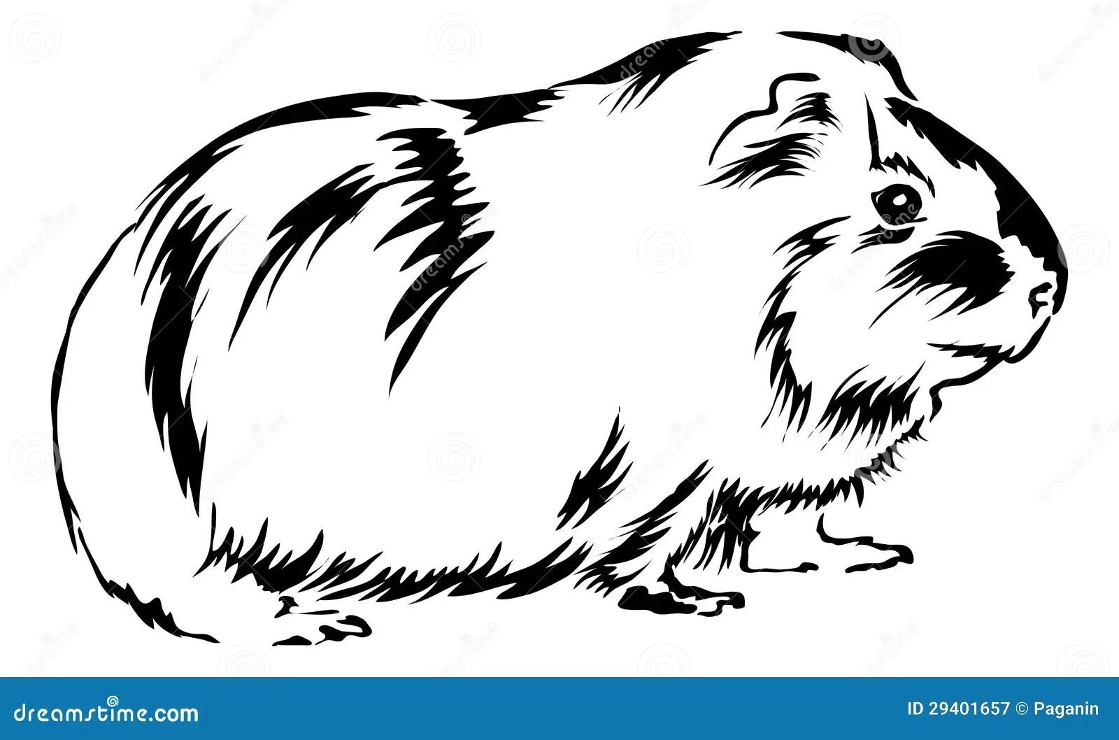 Cute Guinea Pig Stock Vector Illustration Of Mammal