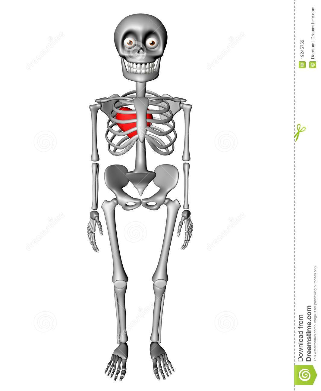 Cute Human Body Skeleton With Red Heart Stock Illustration