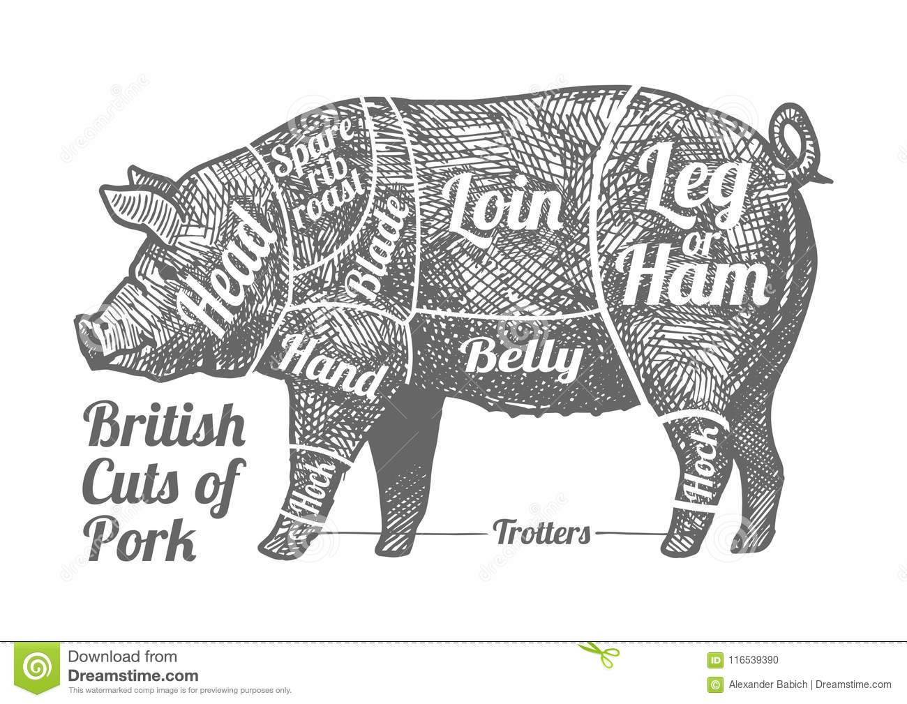 Cuts Of Pork Stock Vector Illustration Of Drawing Grunge