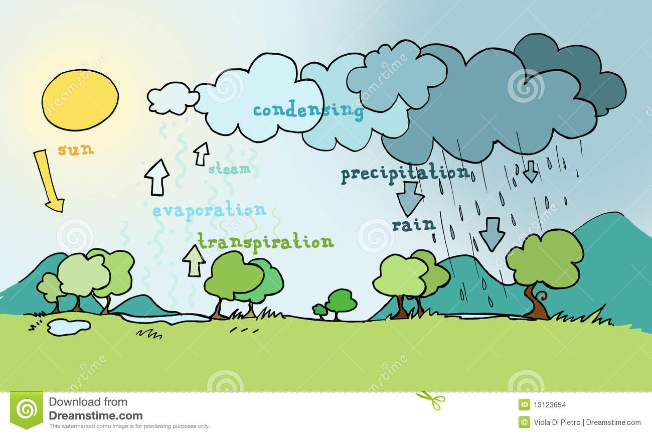 Cycle De L Eau Illustration Stock Illustration Du Herbe