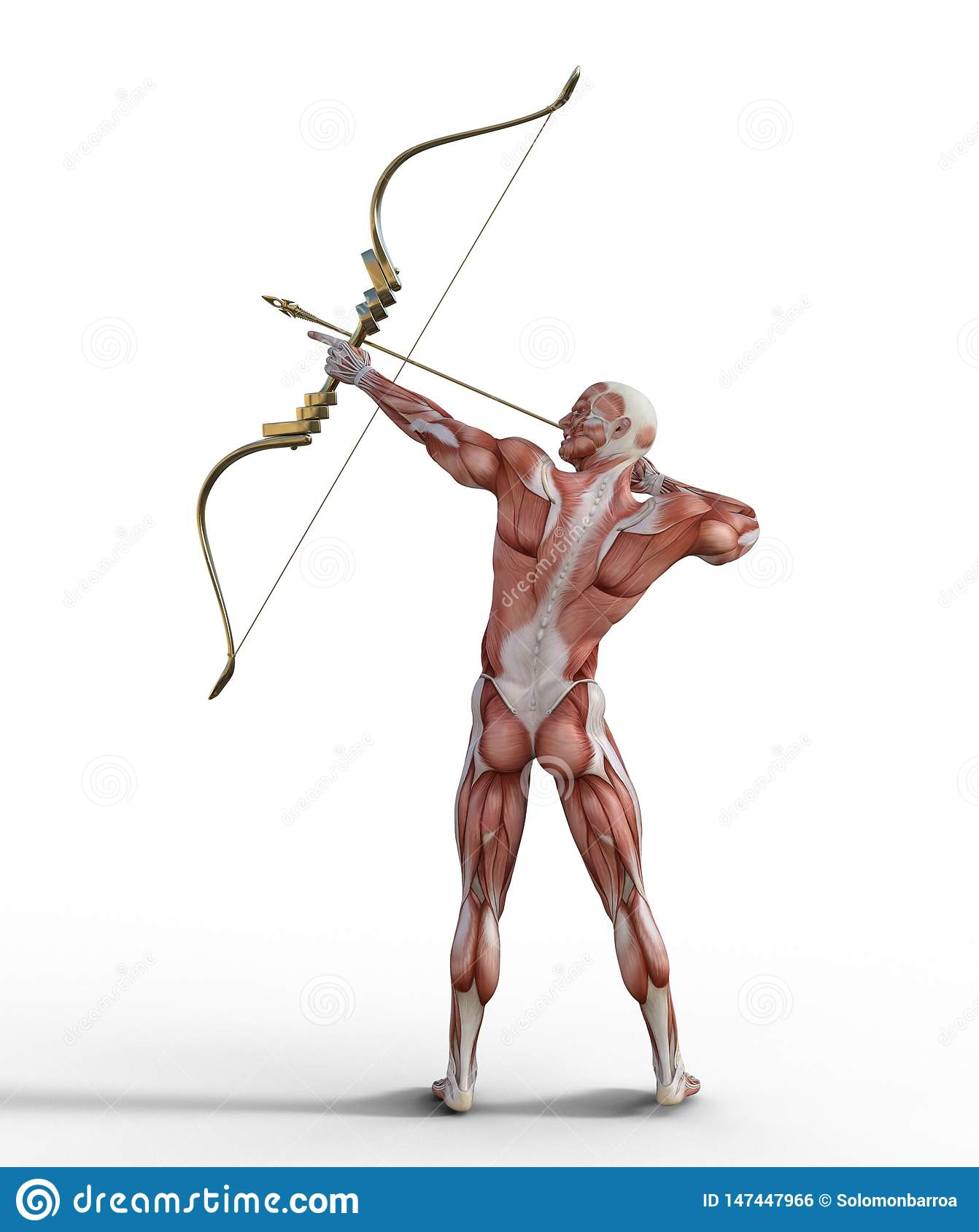 3d Illustration Of Male Muscular System With Bow And Arrow