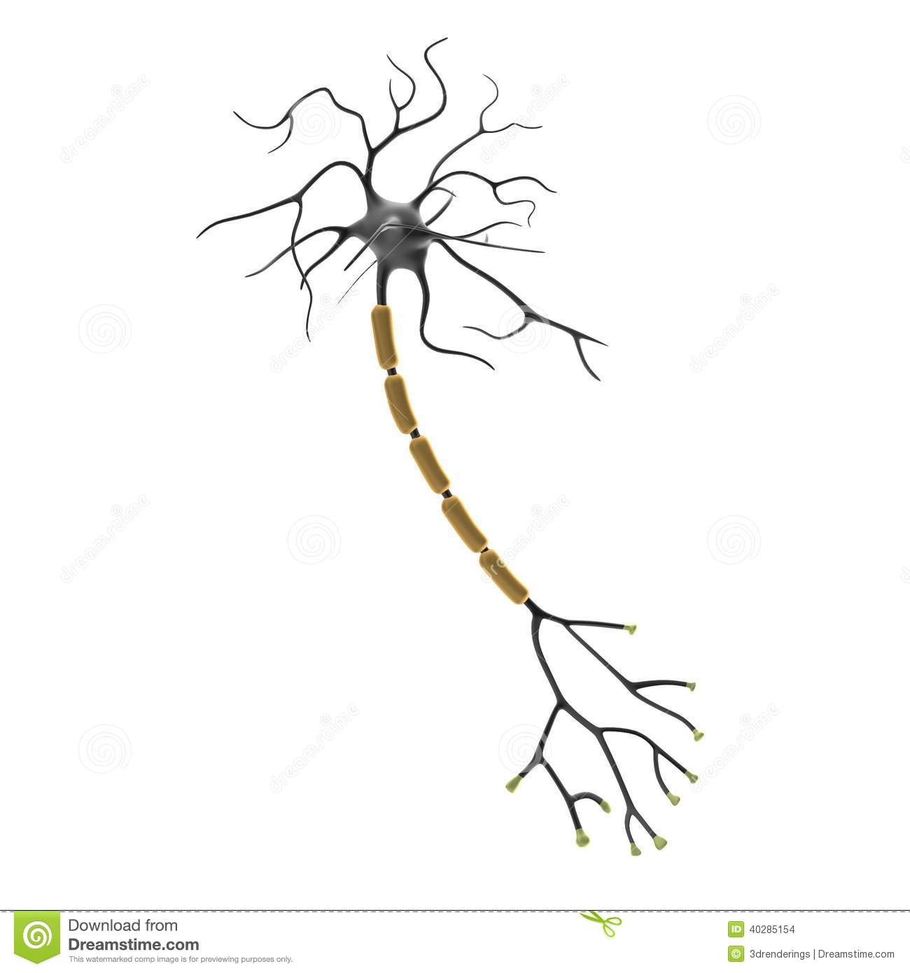 3d Render Of Neuron Stock Illustration Image Of Neuron