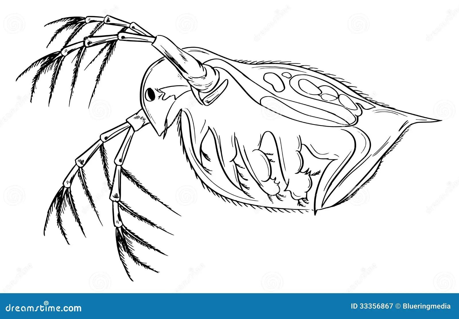 Daphnia Cartoons Illustrations Amp Vector Stock Images
