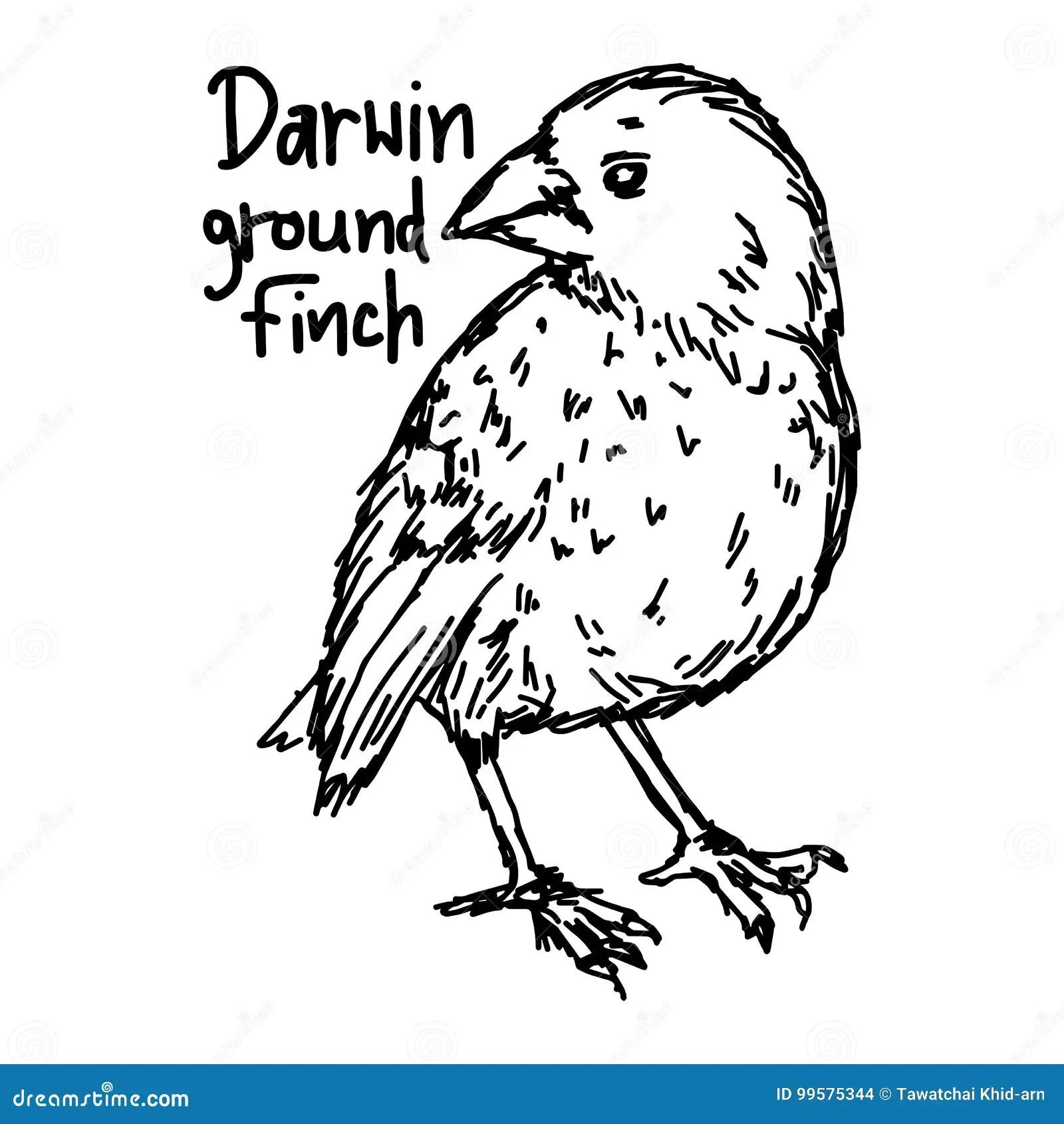 Darwin Ground Finch