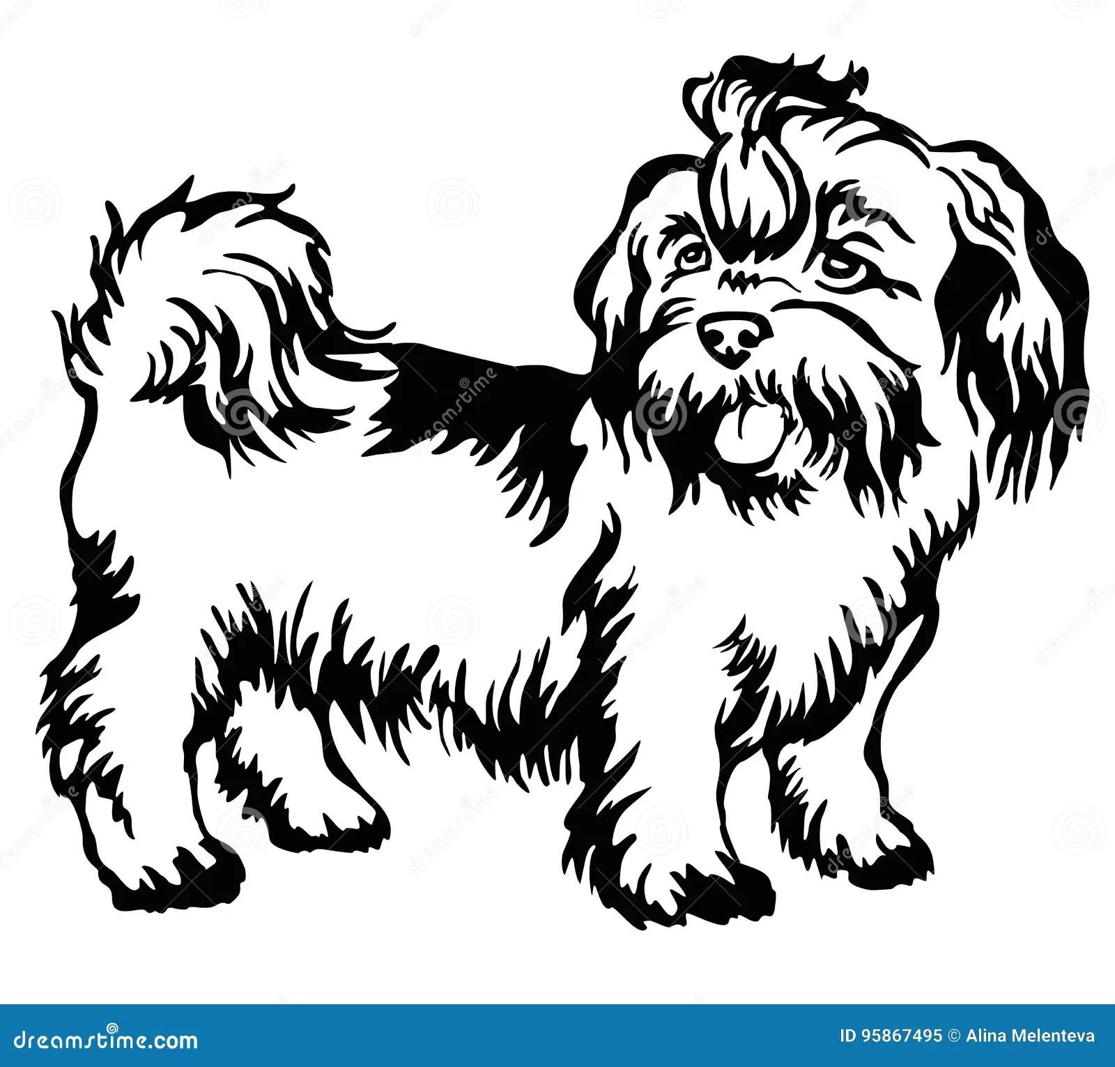 Decorative Standing Portrait Of Dog Shih Tzu Vector Stock