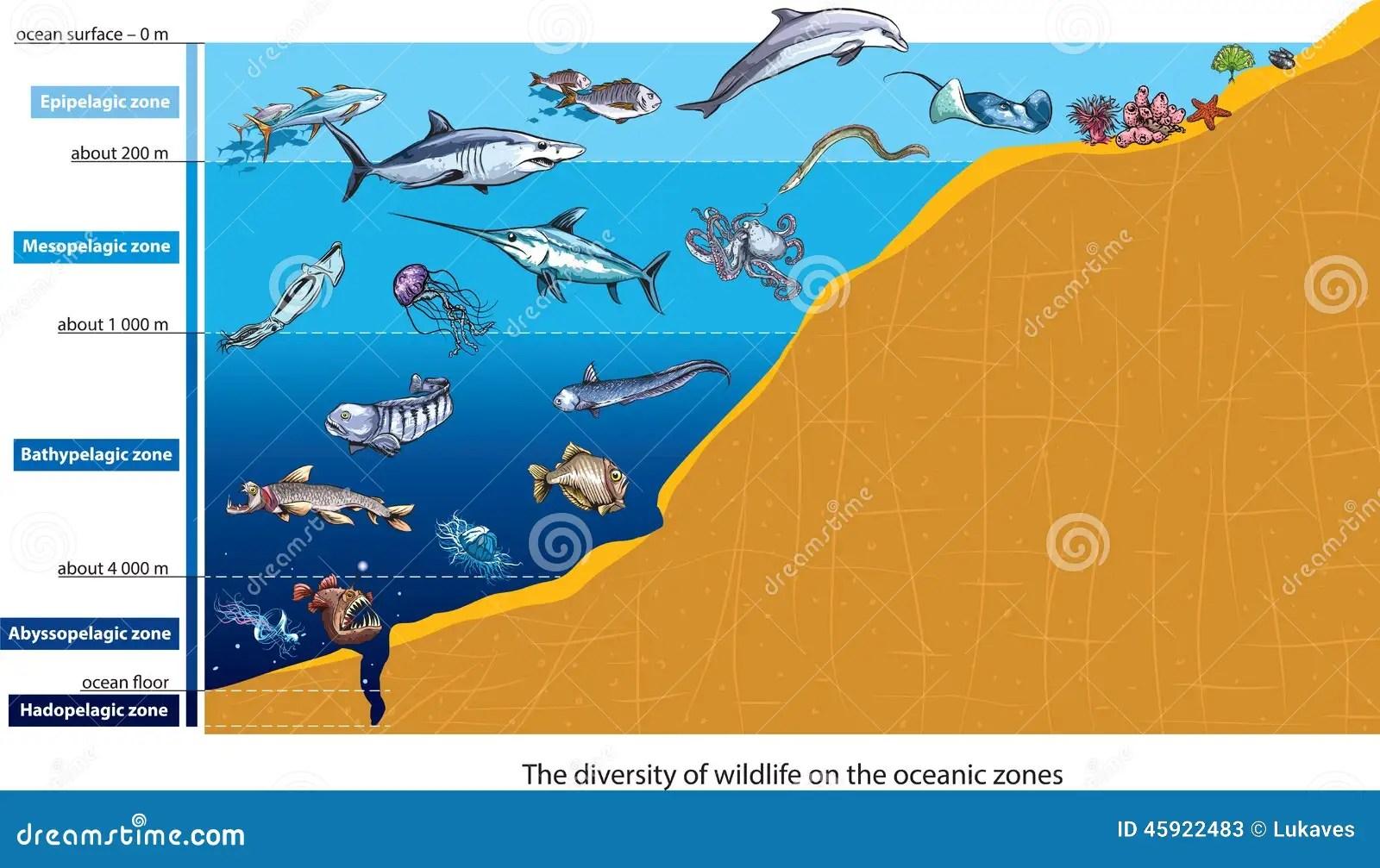 Deep Sea Creatures Stock Vector Illustration Of Anatomy