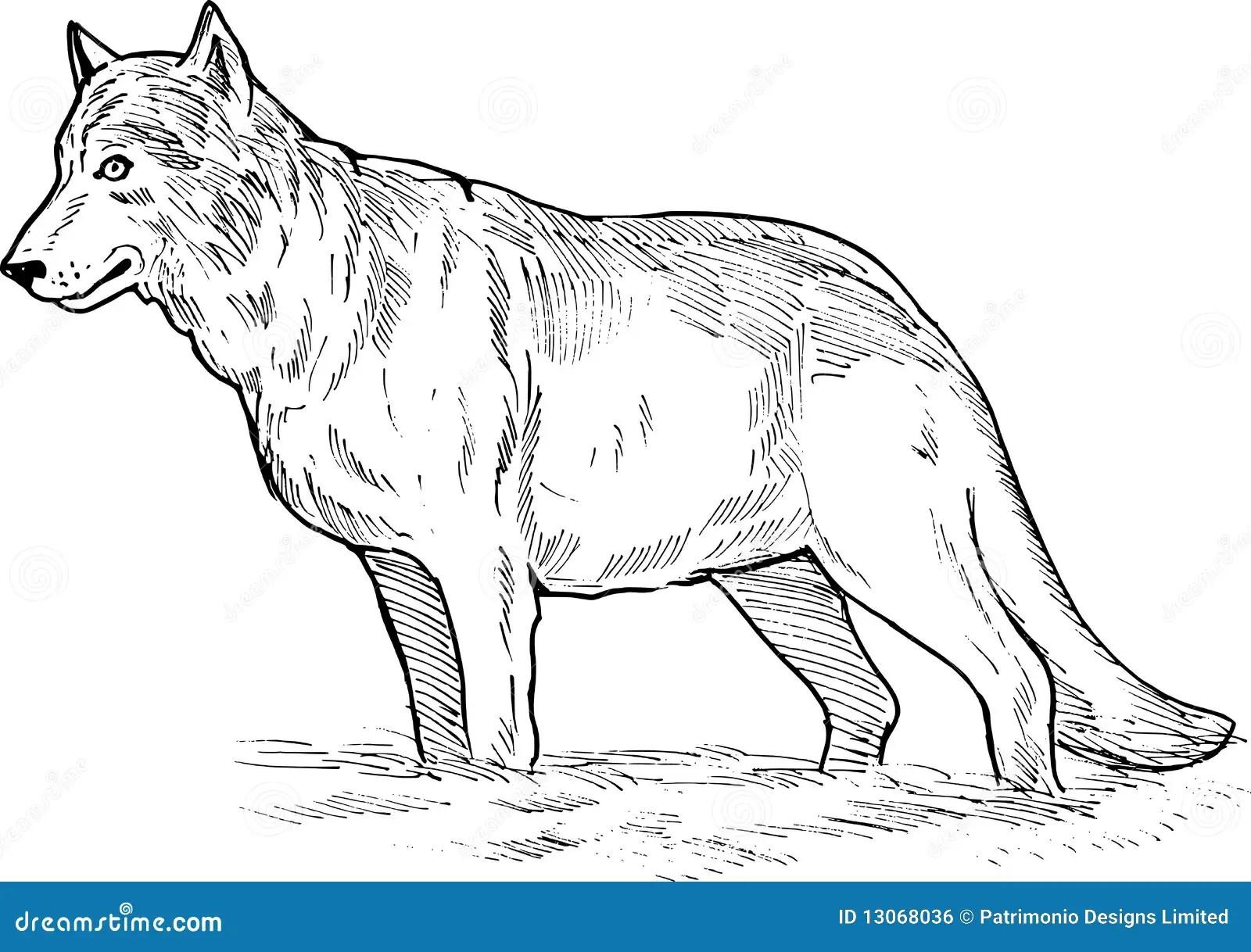 Desenho Do Lobo Cinzento Imagem De Stock Royalty Free