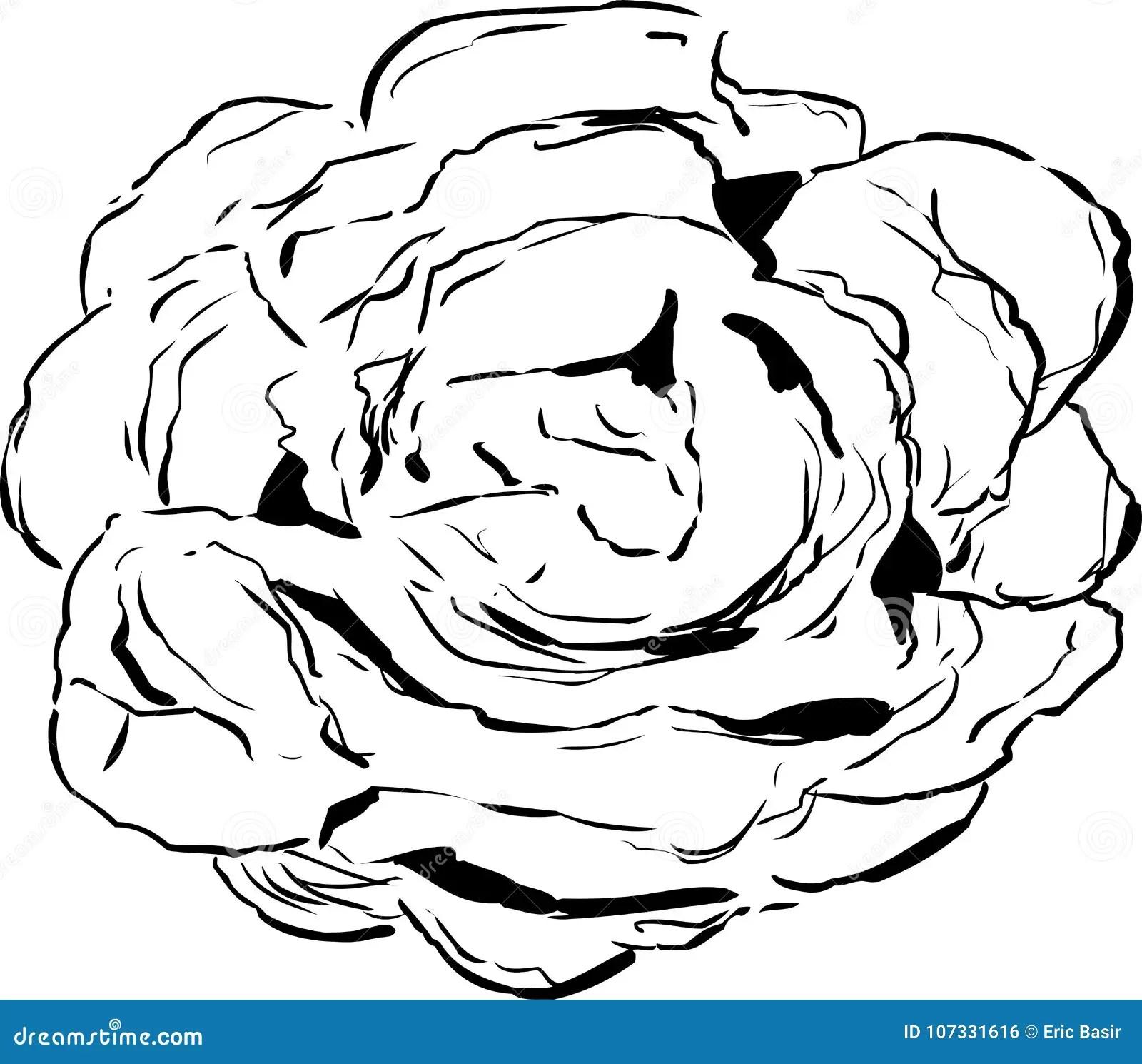 Desenho Esbocado Da Alface De Torneira Ilustracao Stock