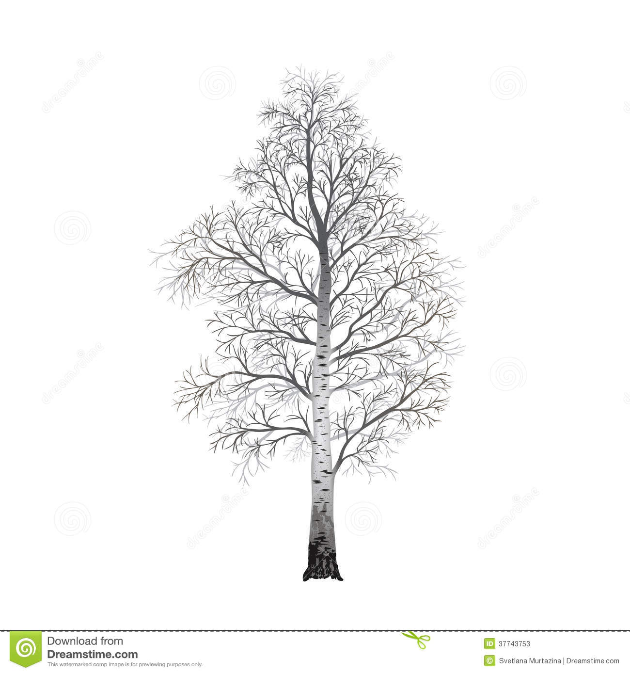 Detached Tree Birch Without Leaves Illustrations Stock