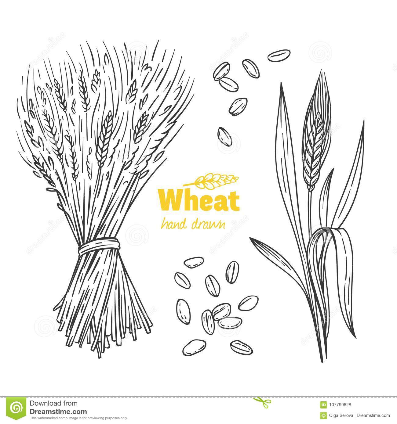 Image Result For Wheat Illustration Garden T Wheat Vector