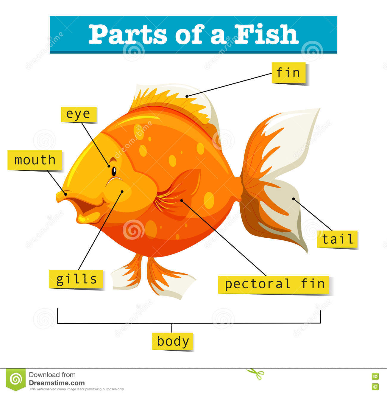 Diagram With Parts Of Fish Stock Vector Illustration Of