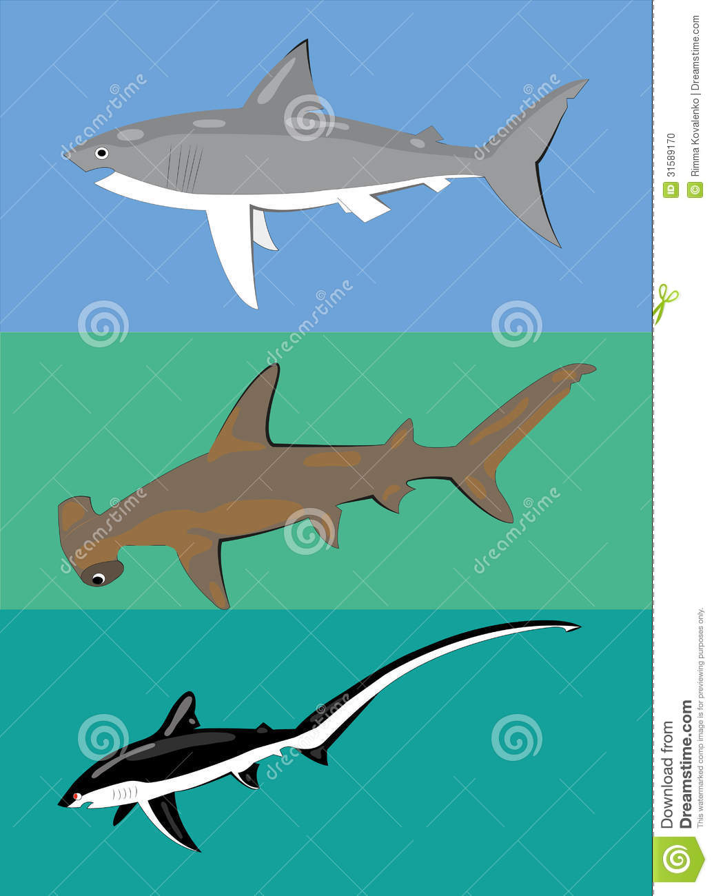 Different Types Of Sharks Stock Vector Image Of Black