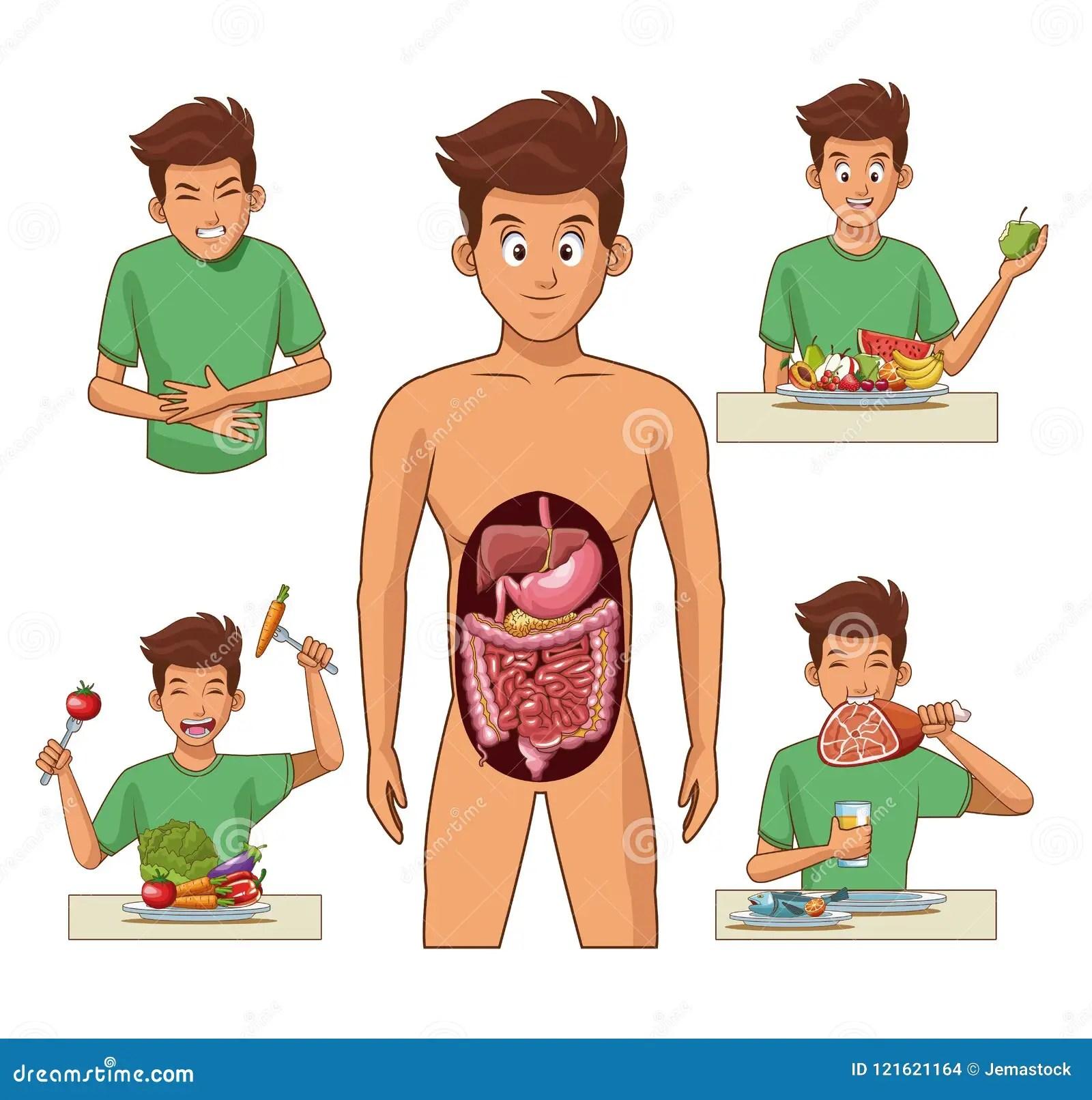 Digestive System Cartoon Stock Vector Illustration Of