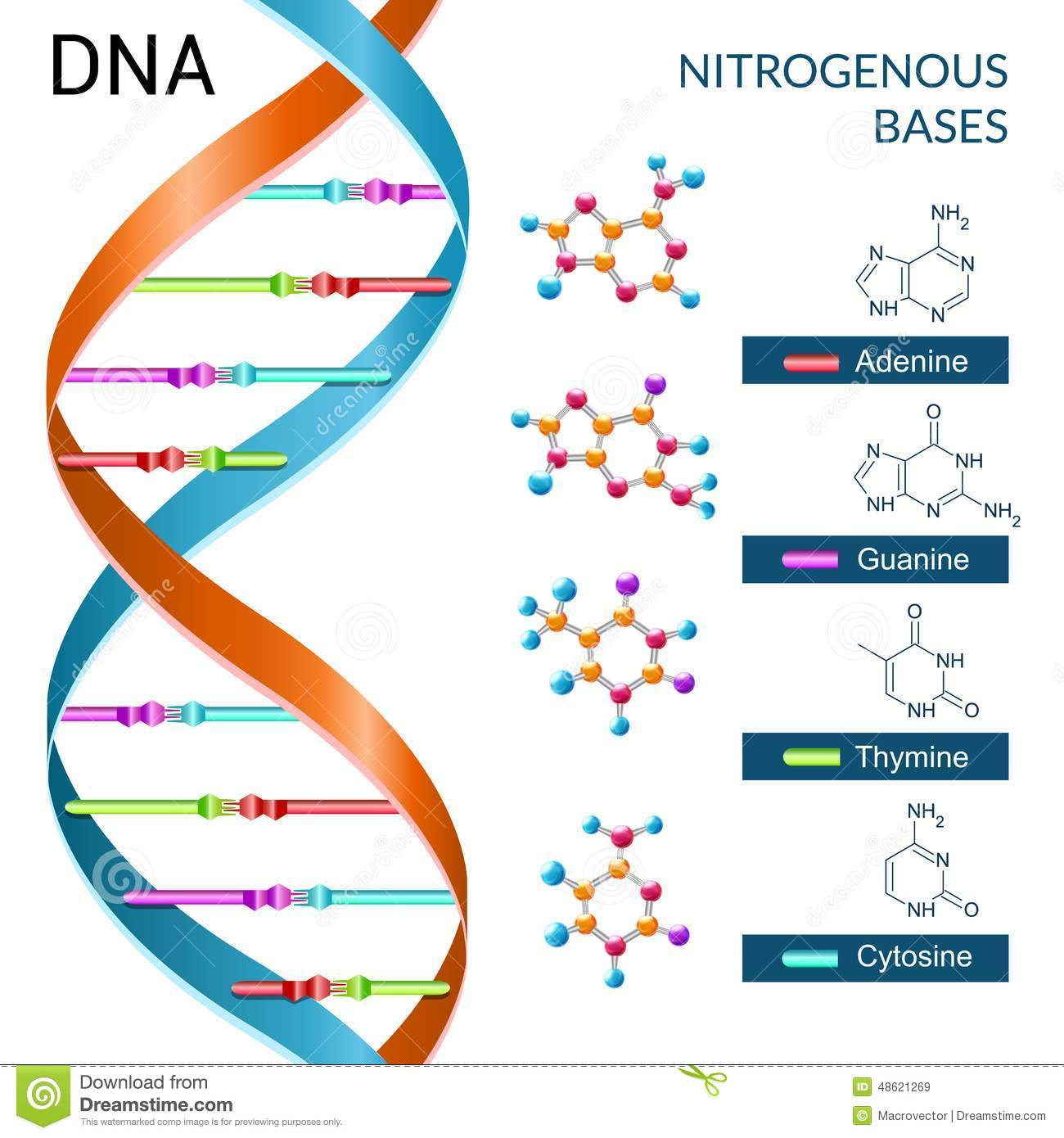 Dna Bases Poster Stock Vector Illustration Of Icon Flyer