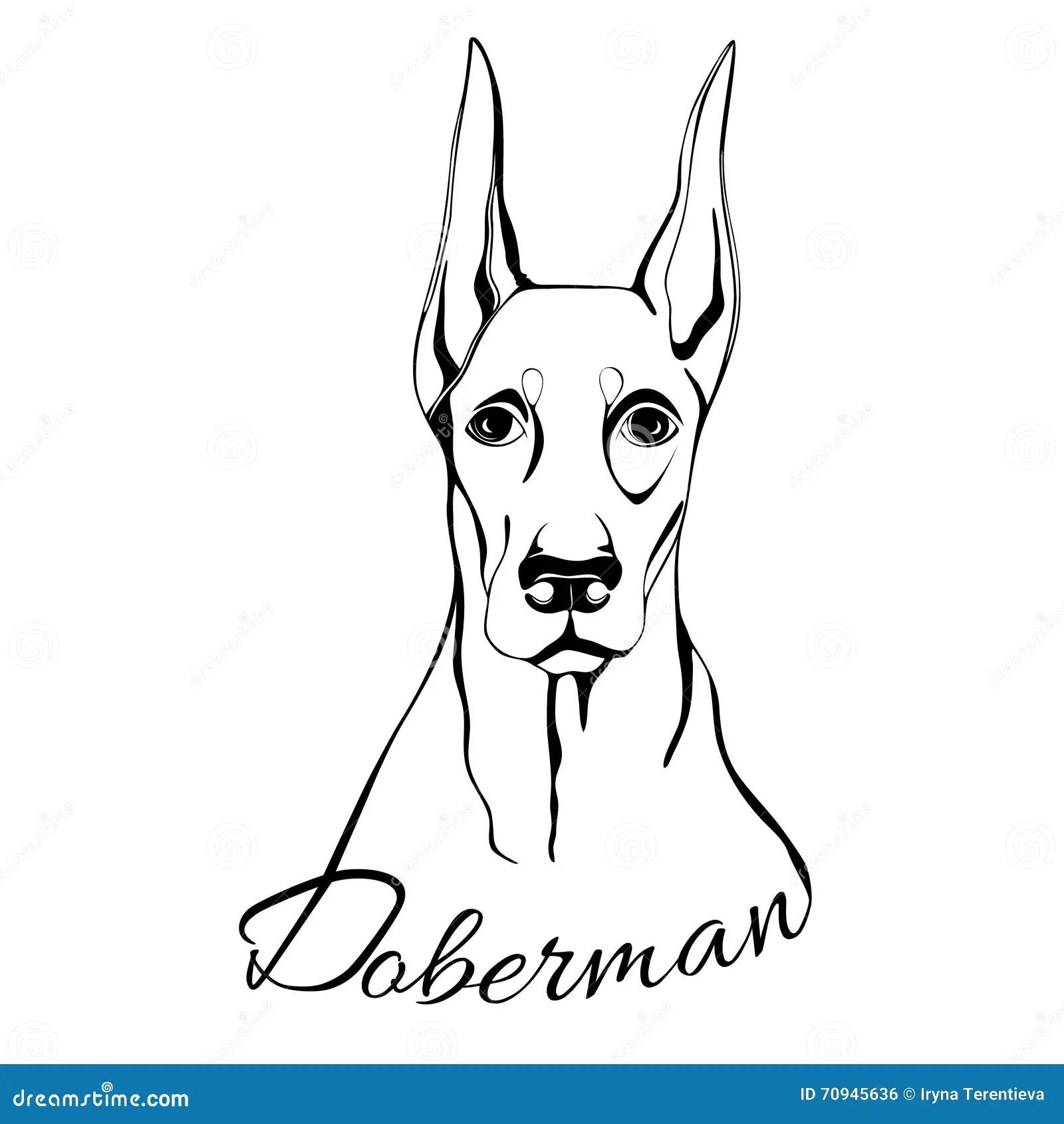 Doberman Dog Head Stock Vector Illustration Of Best