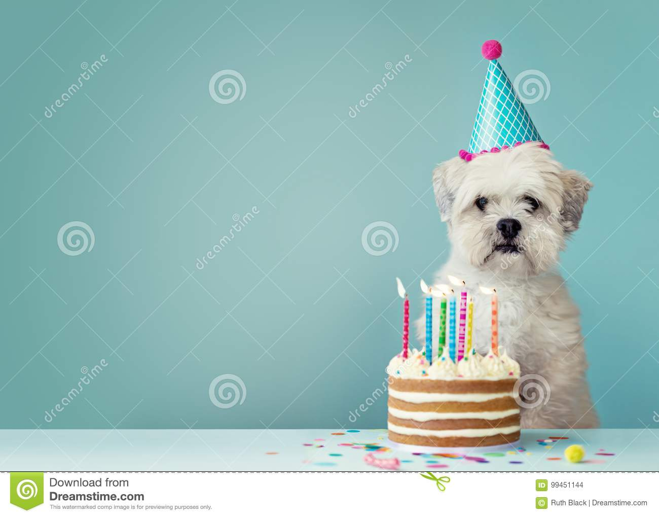 Dog Birthday Stock Photos Download 4 823 Images