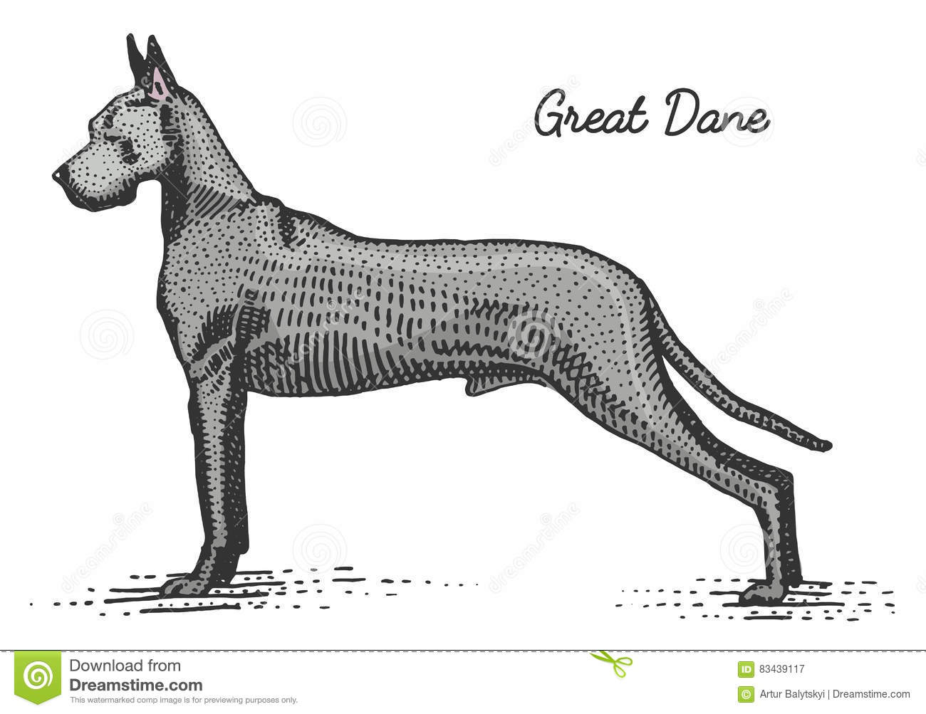 Dog Breed Engraved Hand Drawn Vector Illustration In