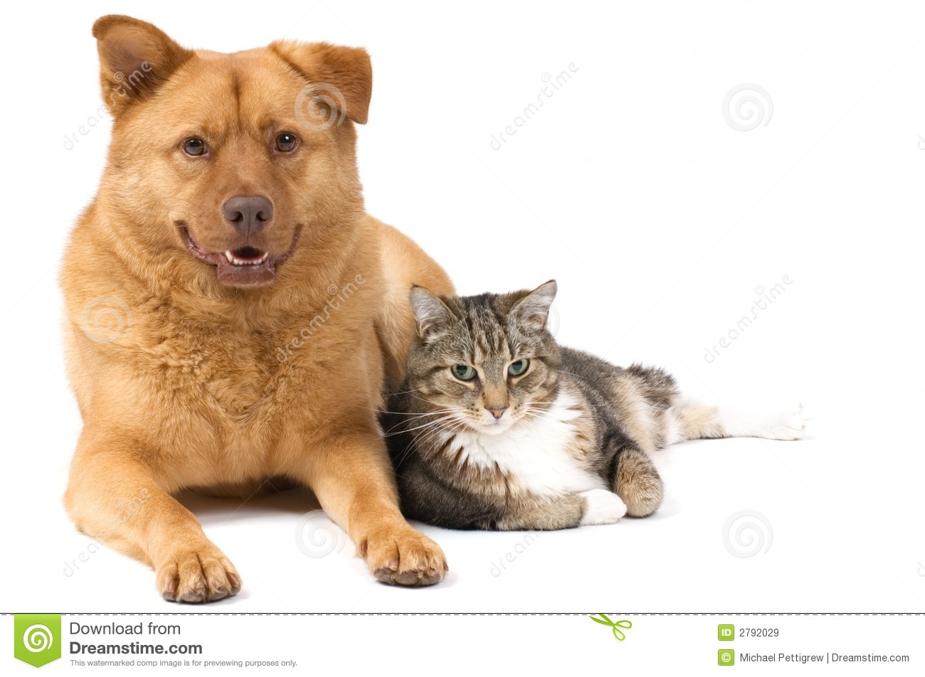 Dog And Cat Stock Image Image Of Rest Animals Asleep