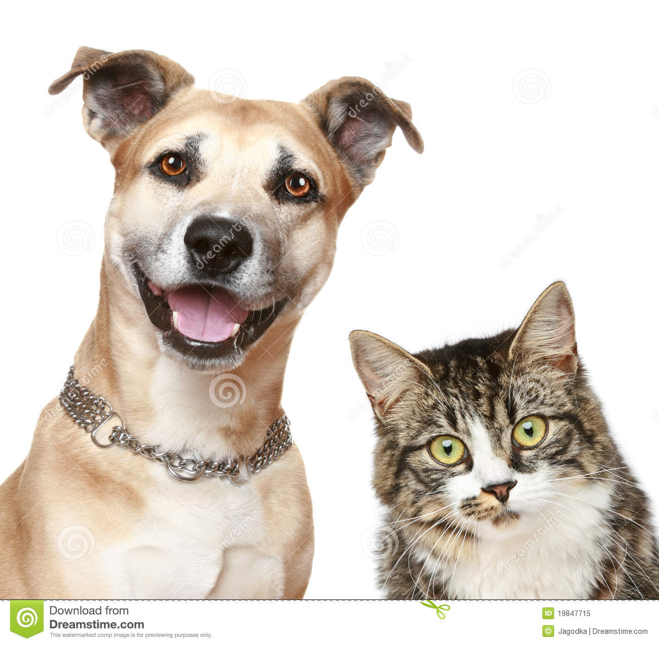 Dog And Cat On A White Background Stock Image