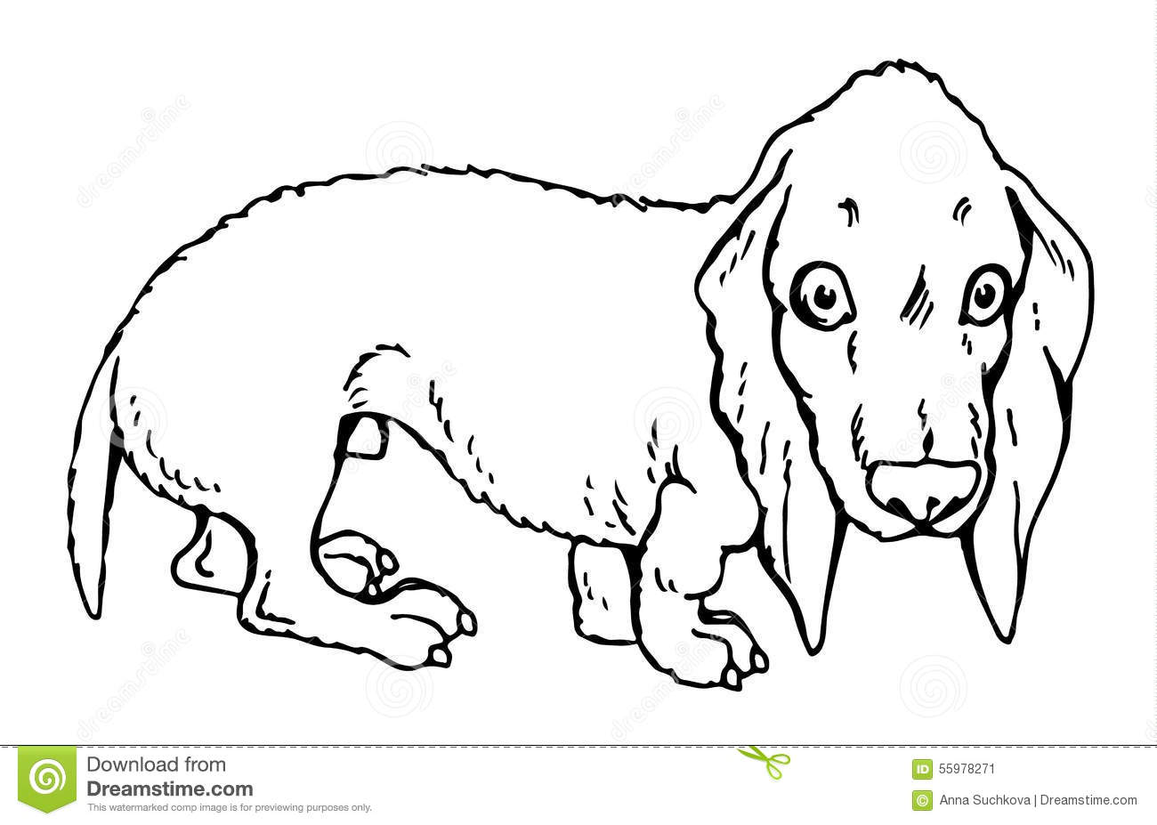 Dog Dachshund Stock Vector
