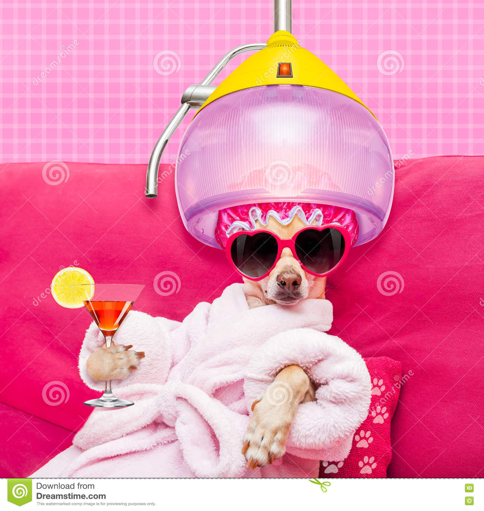 Dog Spa Wellness Stock Photo Image 73801985