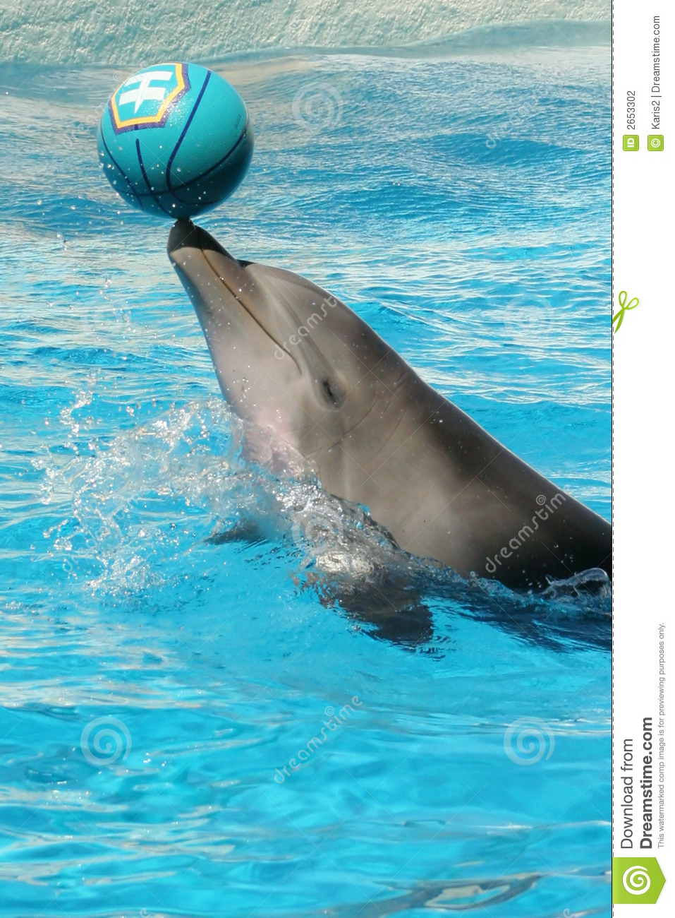 Dolphin With Ball Stock Photo Image Of Ripple Nose Fins