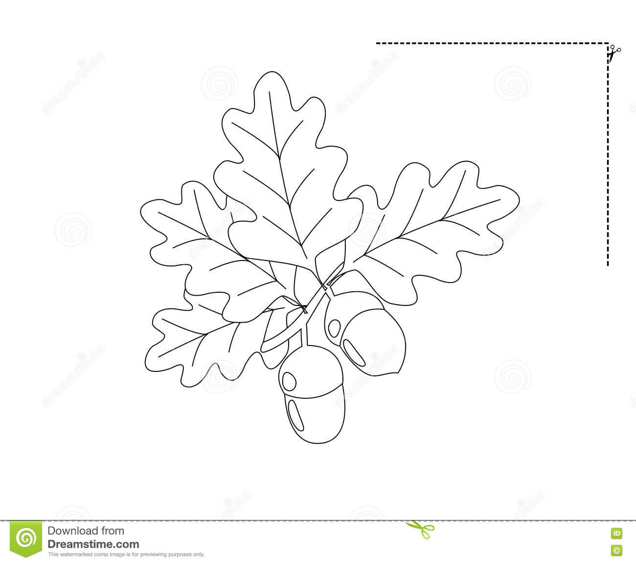 Drawing Acorns Stock Illustration Image Of Black Nature