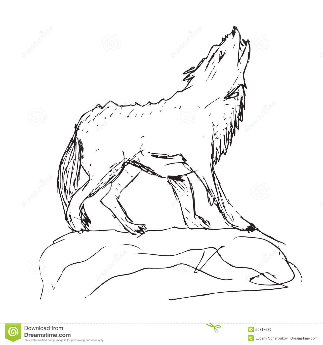 Drawing Of A Big Wolf Stock Illustration Illustration Of