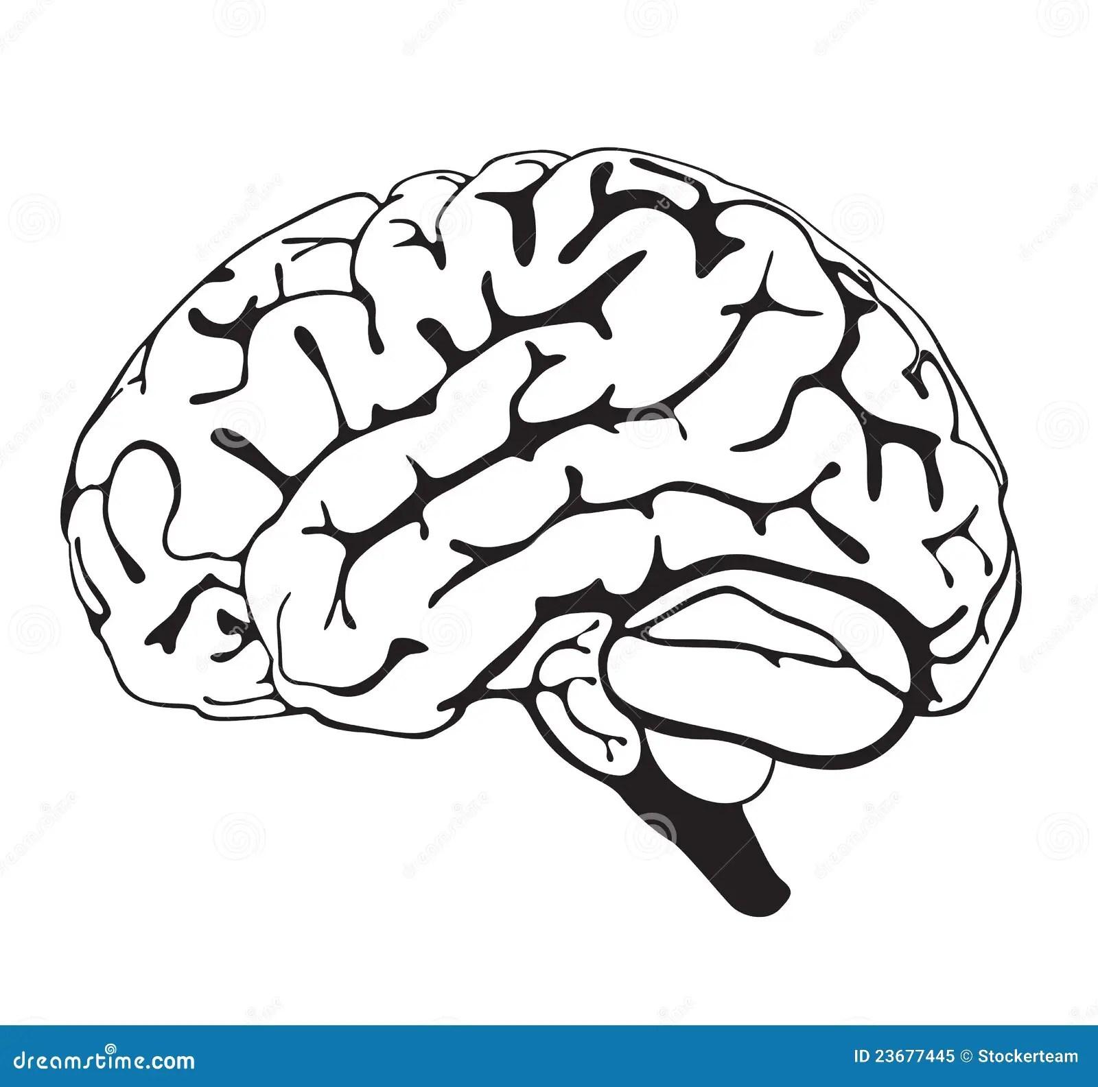 Drawing Brain Closeup Royalty Free Stock Photo
