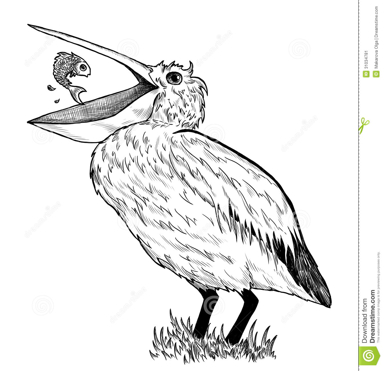 Drawing Of Pelican With Fish Stock Illustration