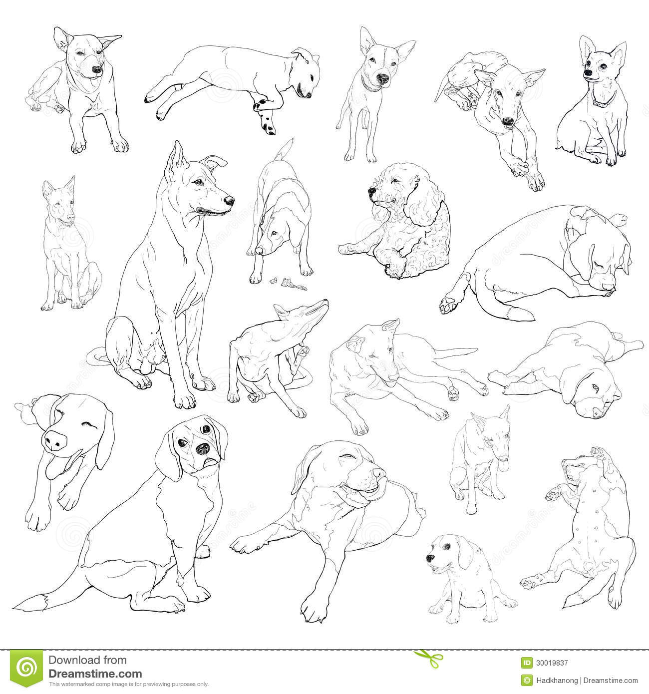 Vector Set Of Dogs Stock Vector Image Of Illustration
