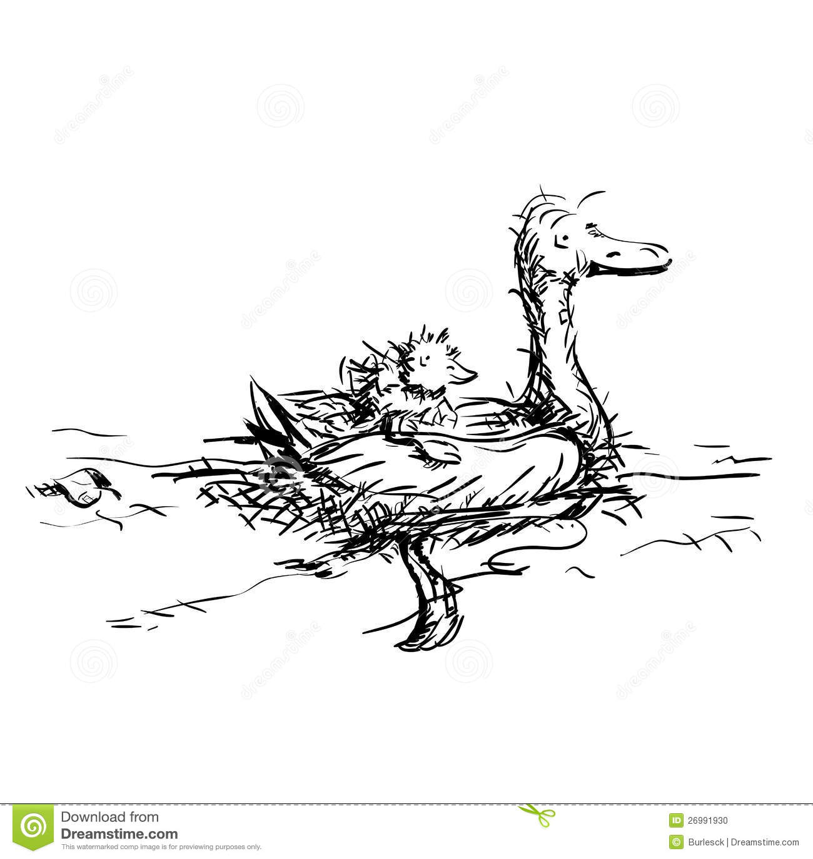 U Of Ducks