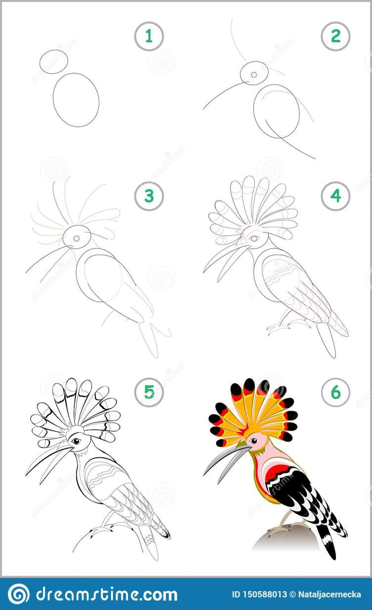 Educational Page For Kids. How To Draw Step By Step A Cute Hoopoe ...