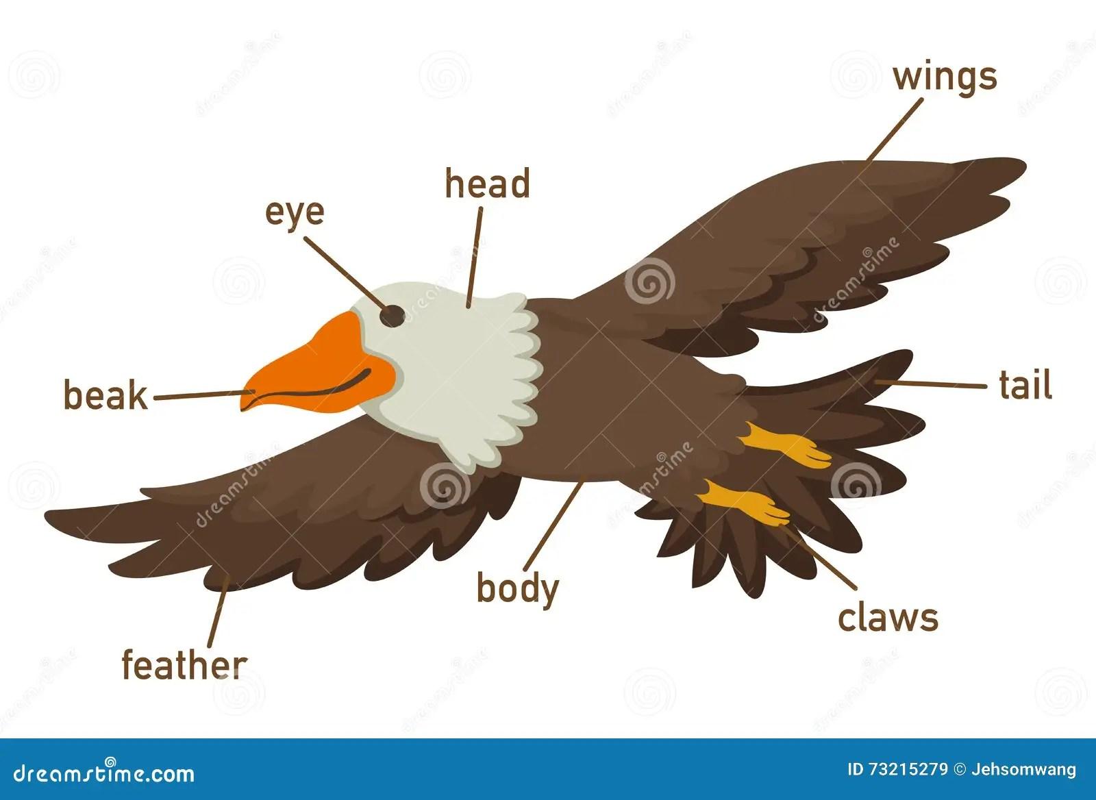 Ejemplo De La Pieza Del Vocabulario De Las Aguilas Del
