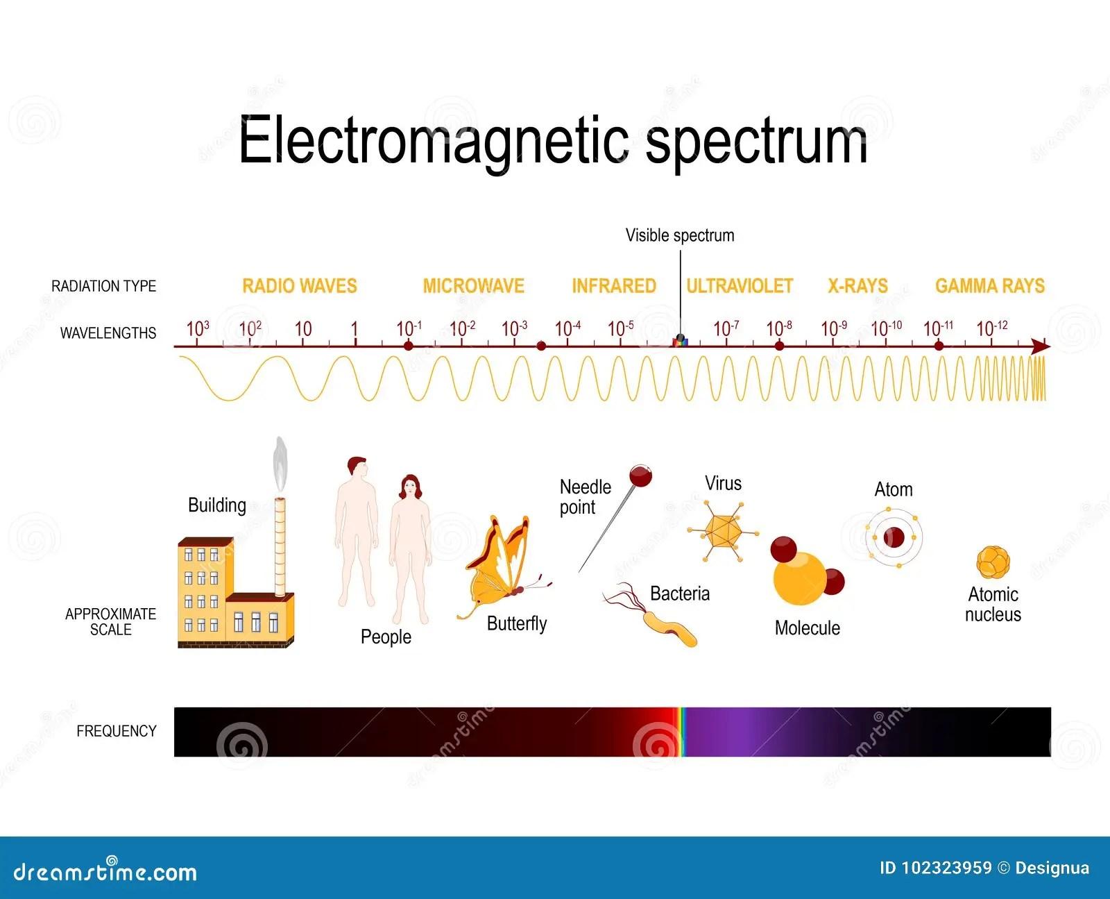 Electromagnetic Spectrum Stock Vector Illustration Of