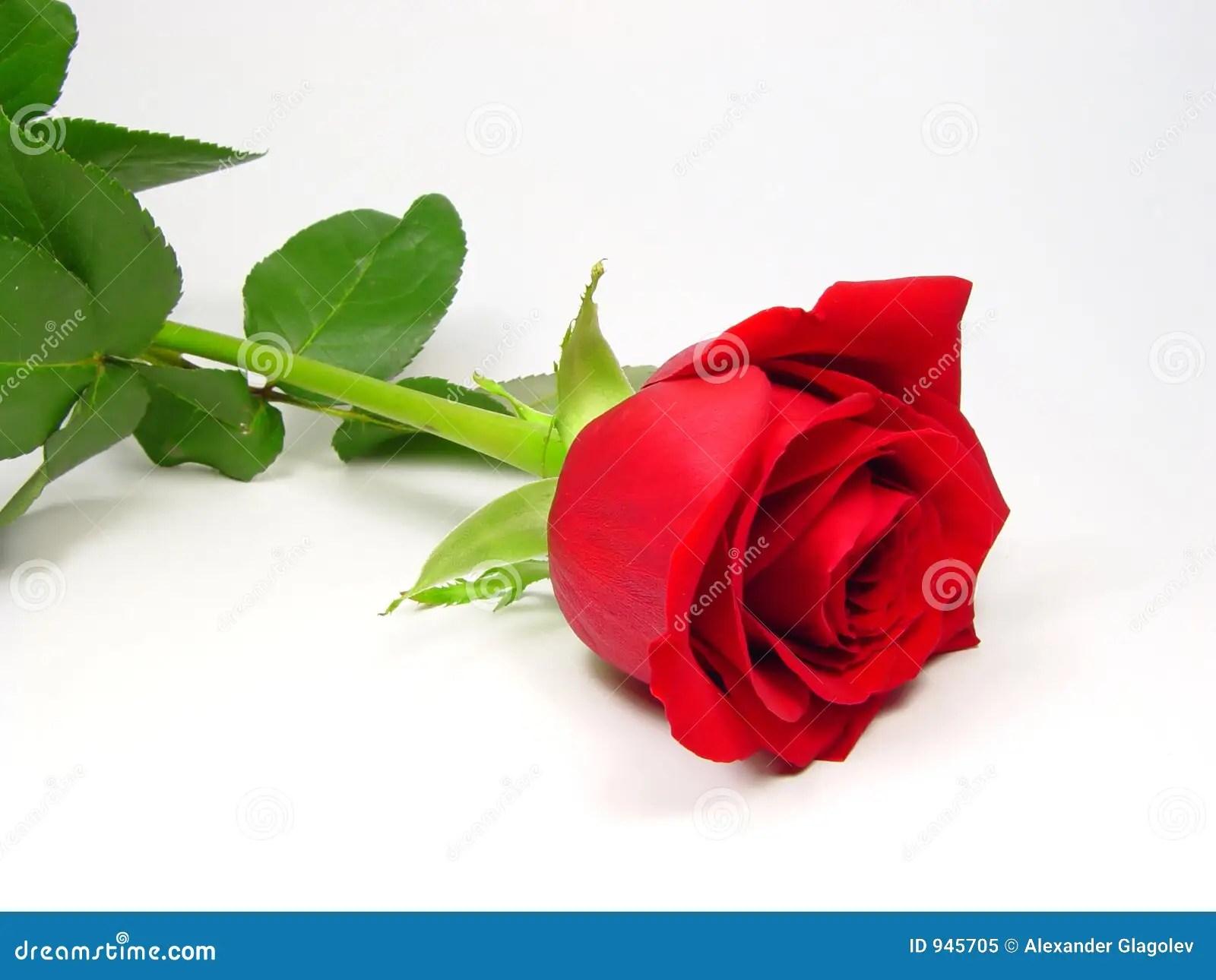 Elegant Rose Stock Image Image Of Forever Flower Ring
