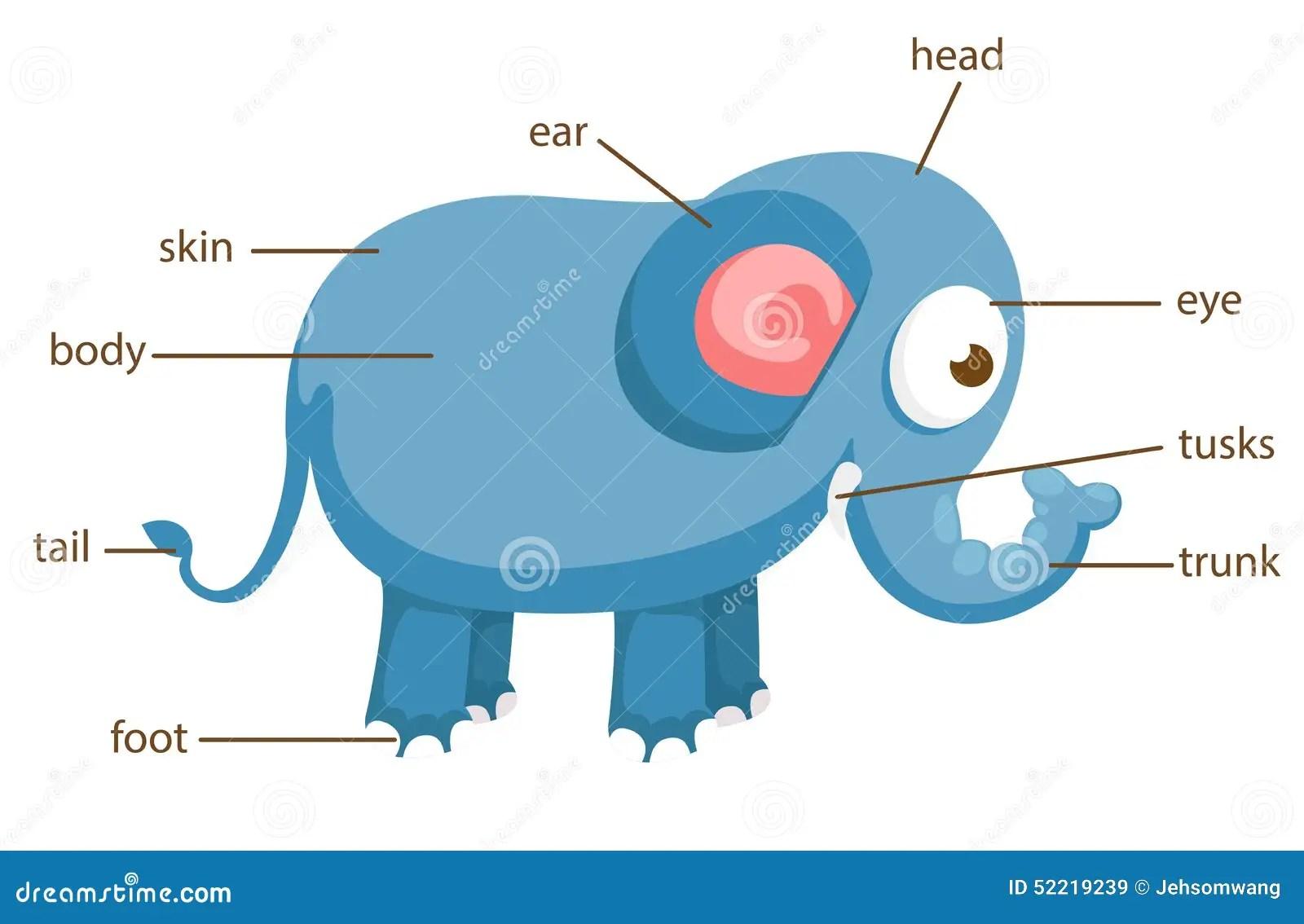 Elephant Vocabulary Part Of Body Vector Stock Vector
