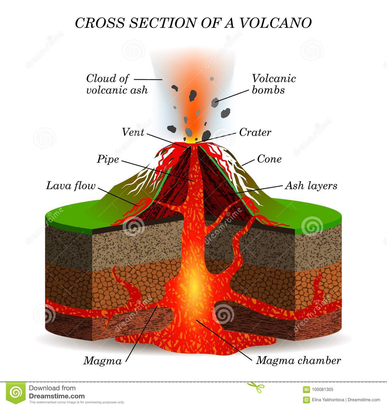 Eruzione Ignea Del Vulcano Nella Sezione Trasversale