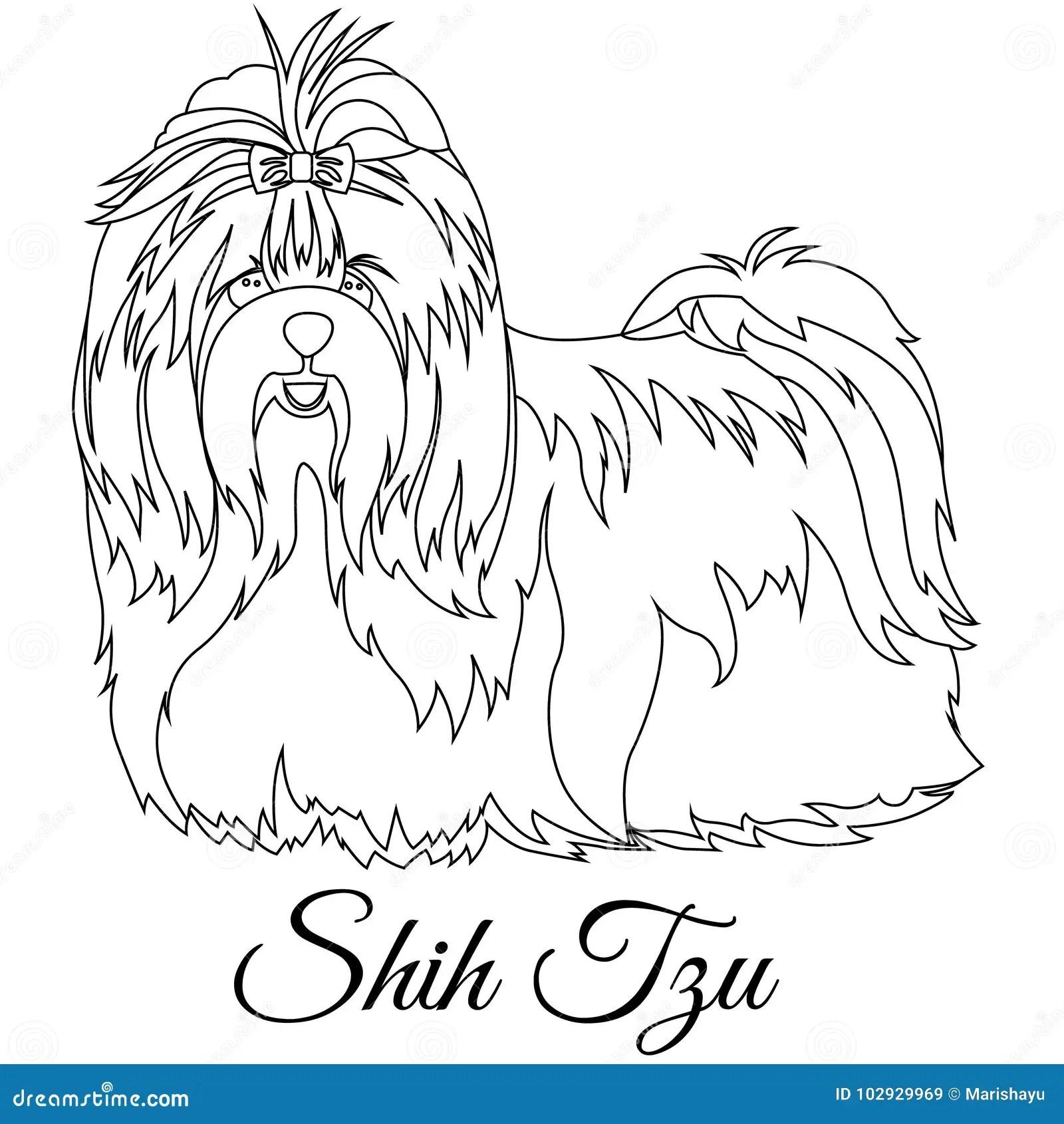 Esboco Do Tzu De Shih Ilustracao Stock Ilustracao De Raca