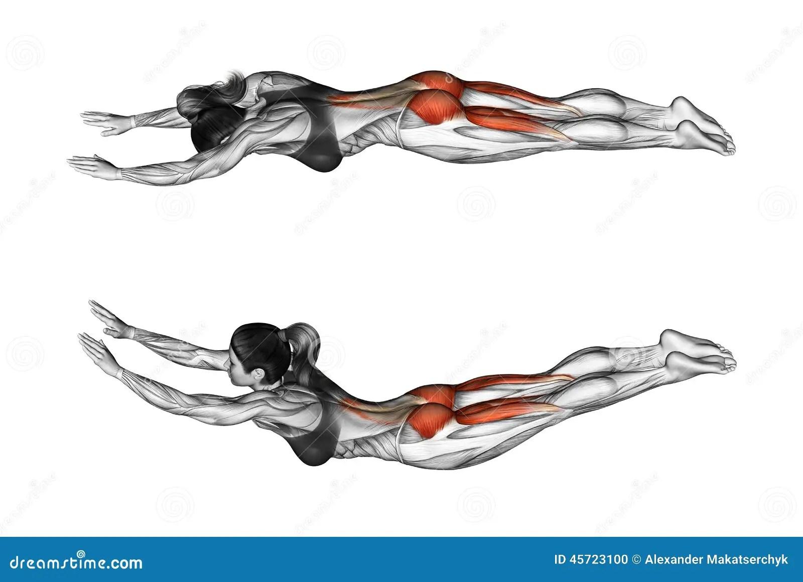 Esercitazione Di Forma Fisica L Esercizio Gradisce Il