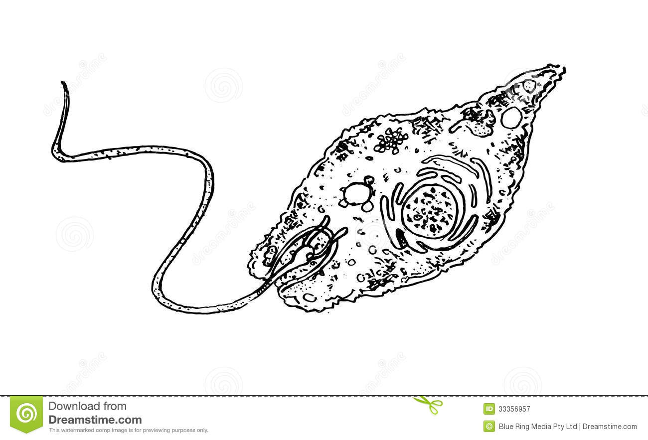 Euglena Royalty Free Stock Photography