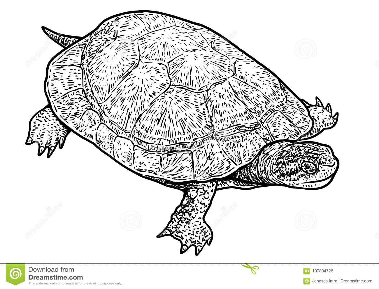 European Pond Turtle Illustration Drawing Engraving Ink