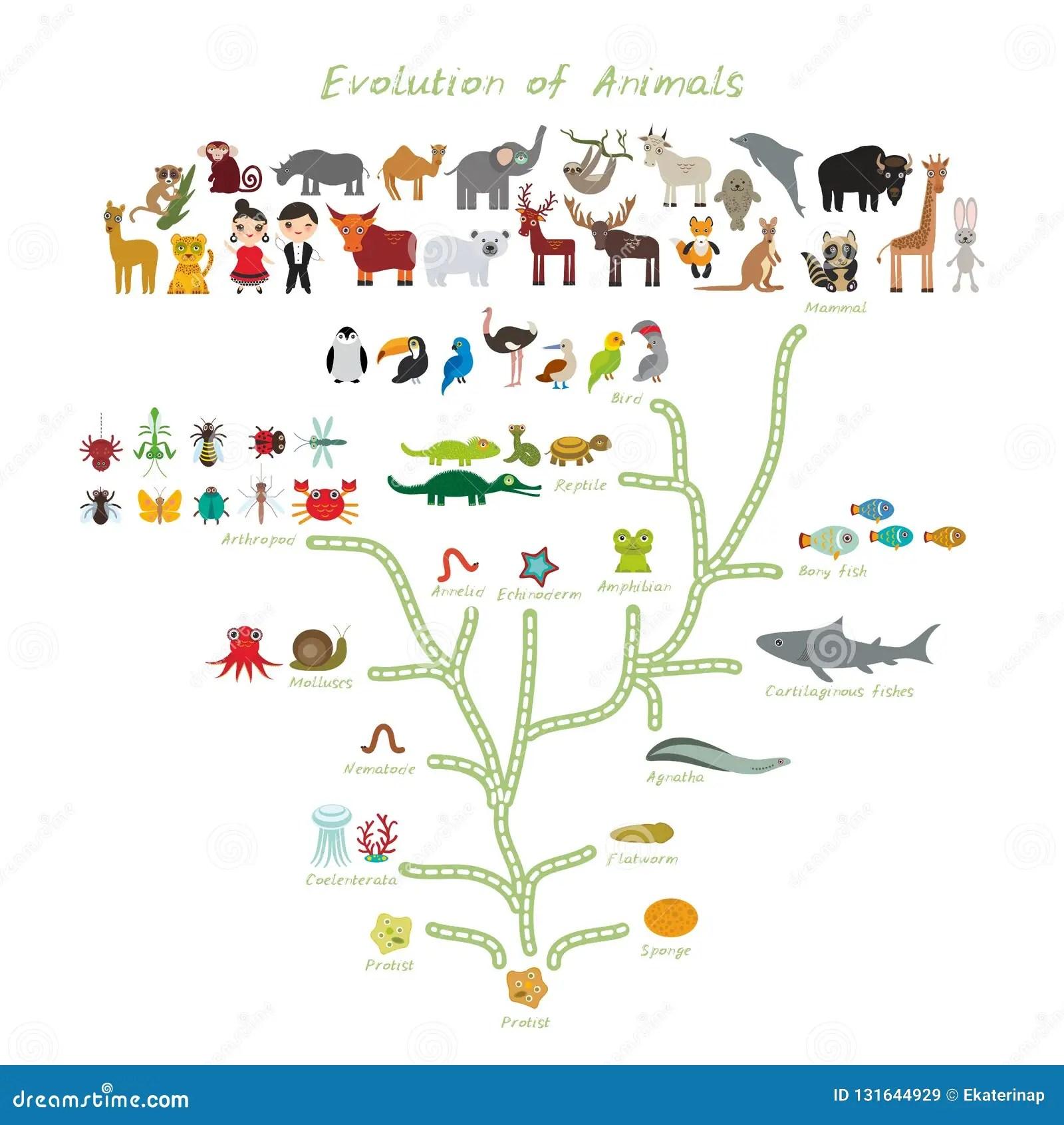 Evolution In Biology Scheme Evolution Of Animals Isolated