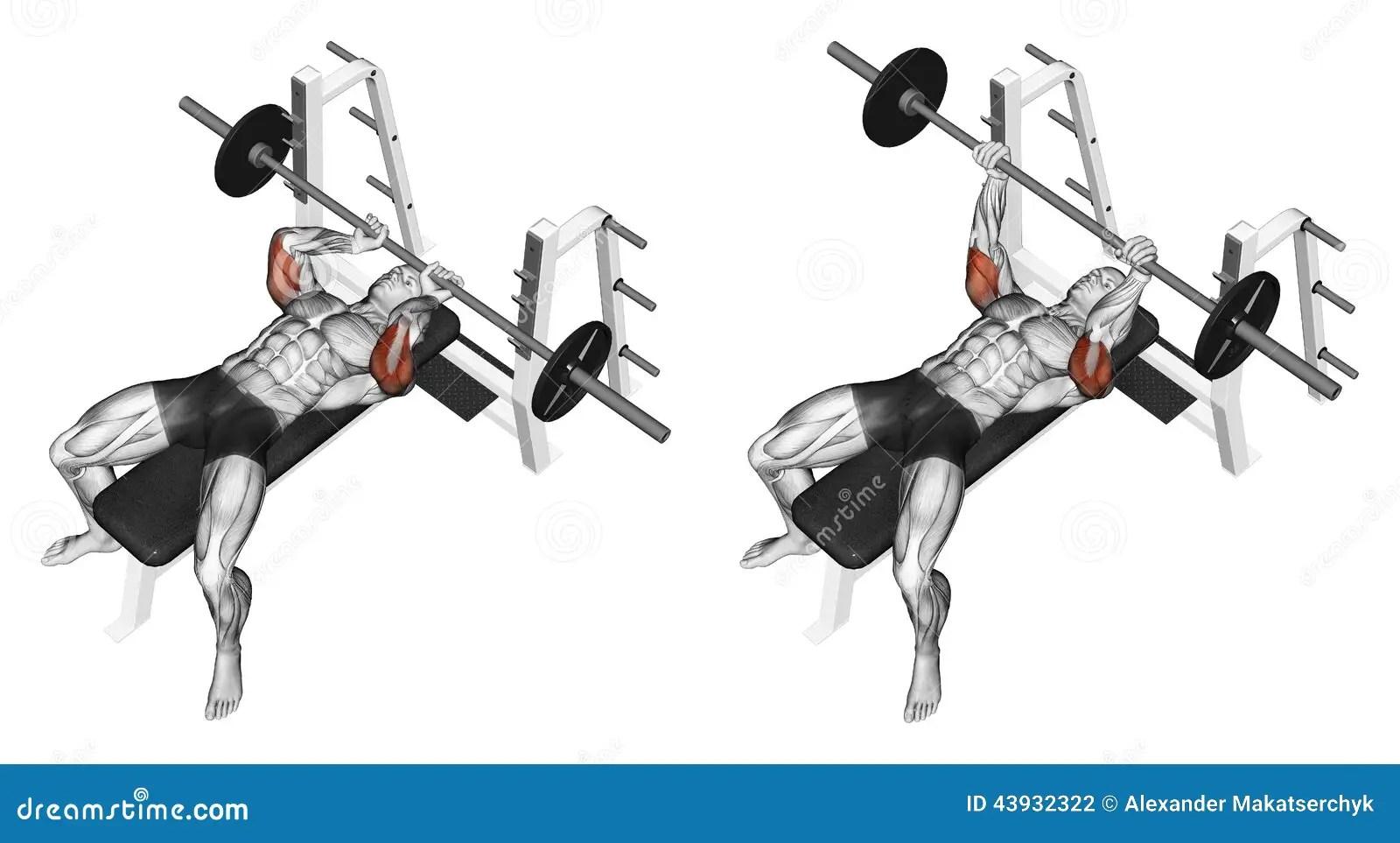 Exercising Extension Barbell Lying Stock Illustration