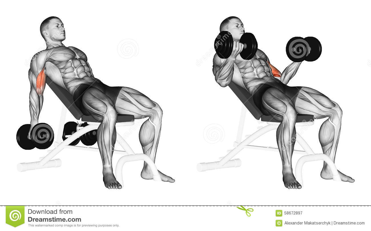 Dumbbell Bicep Curls Clip Art Cliparts