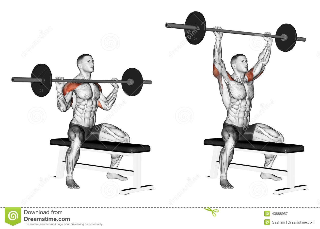 Bodybuilding Chest Exercises For Men Images