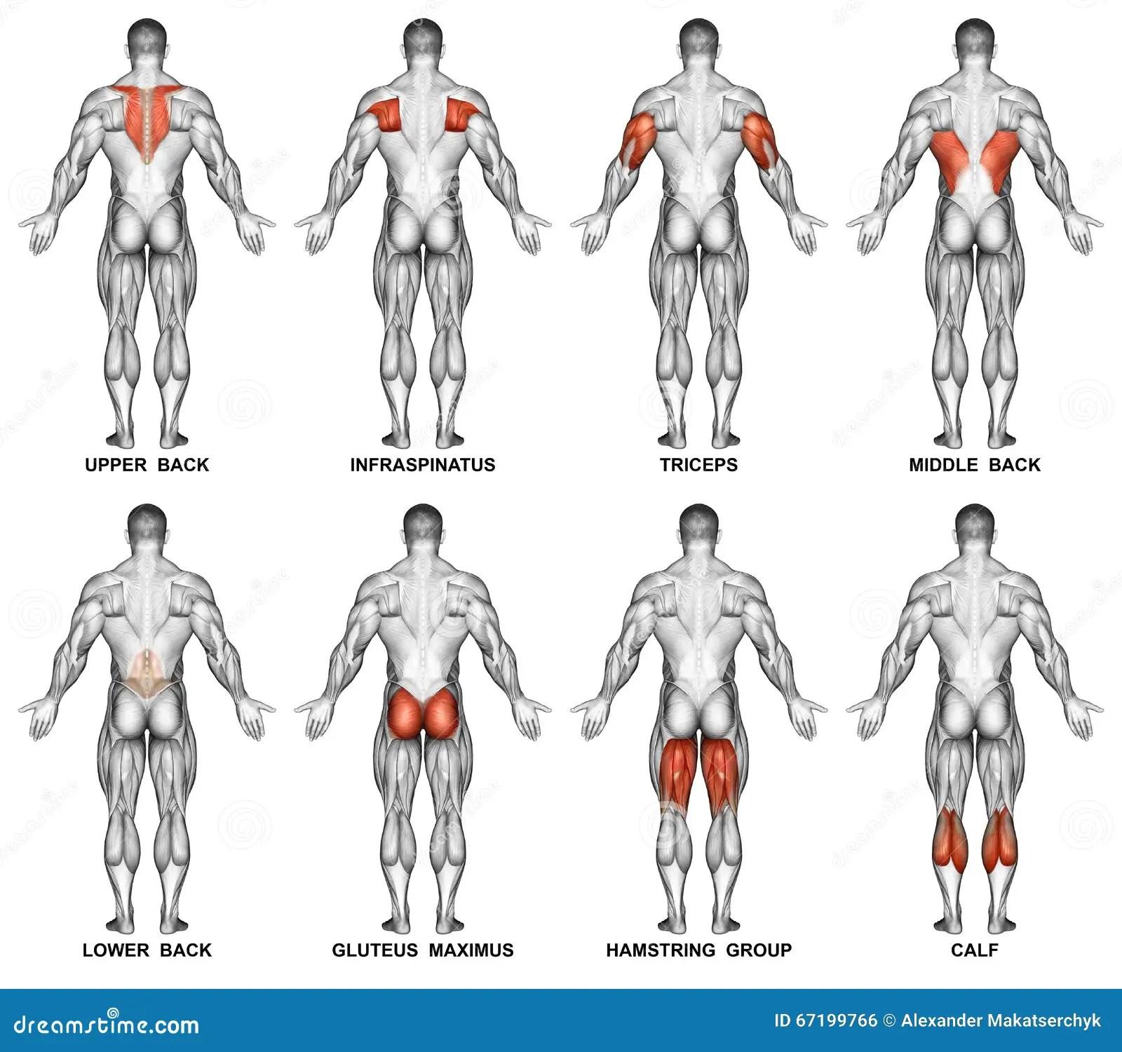 Exercising Proyeccion Trasera Del Cuerpo Humano Foto De