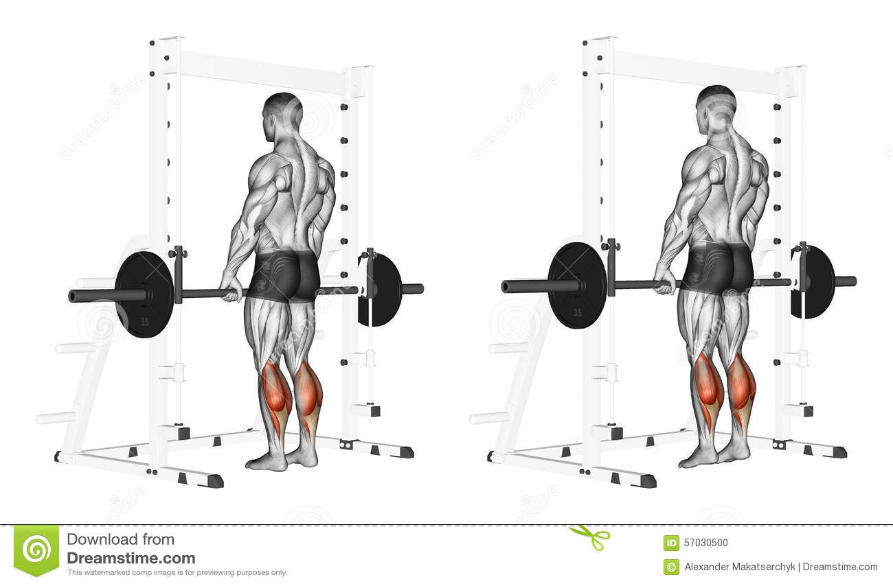 Exercising Rise On Toes With A Barbell Stock Illustration